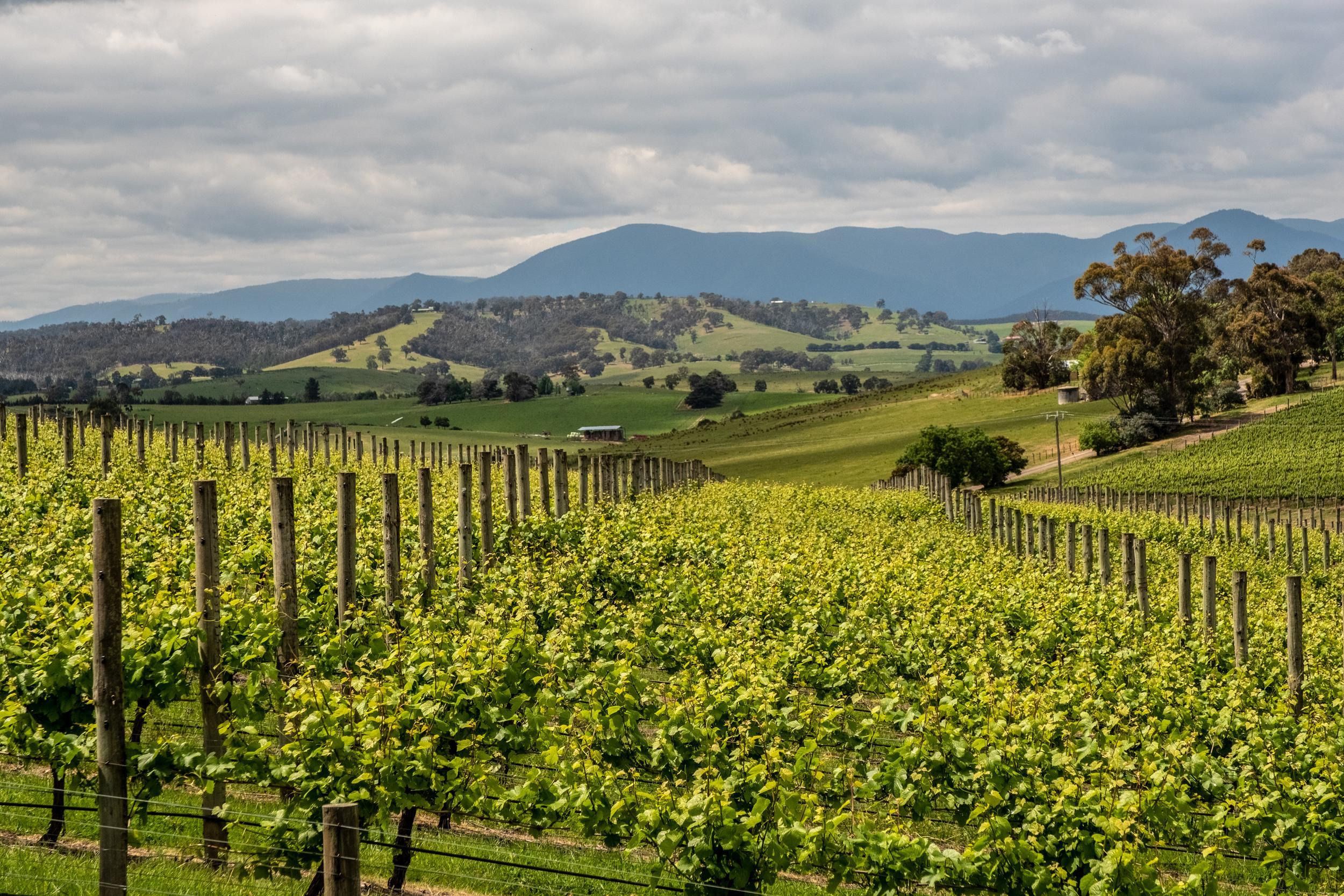 How to Spend 1 Day in the Yarra Valley