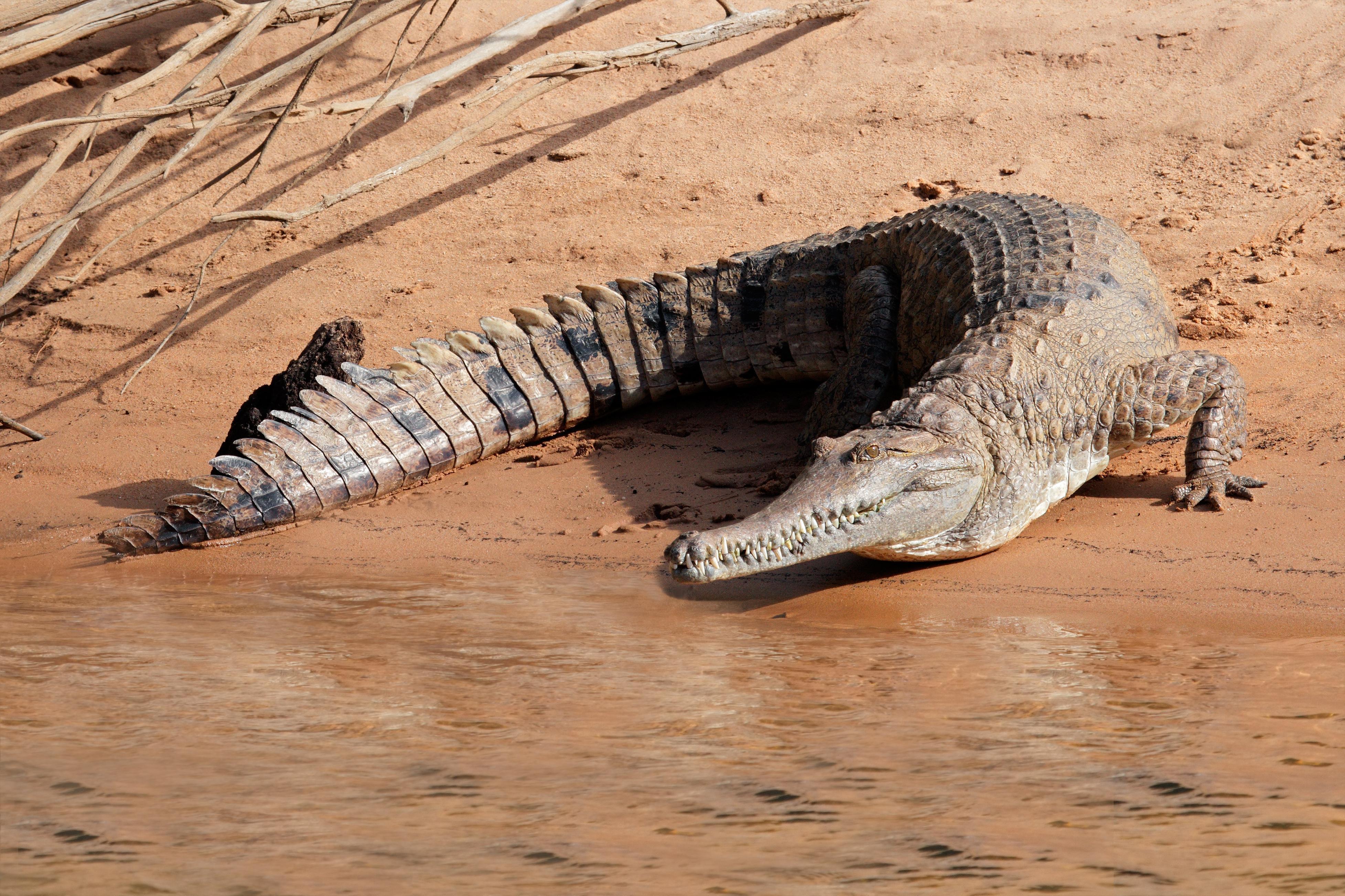 How to Spot Wildlife in Darwin