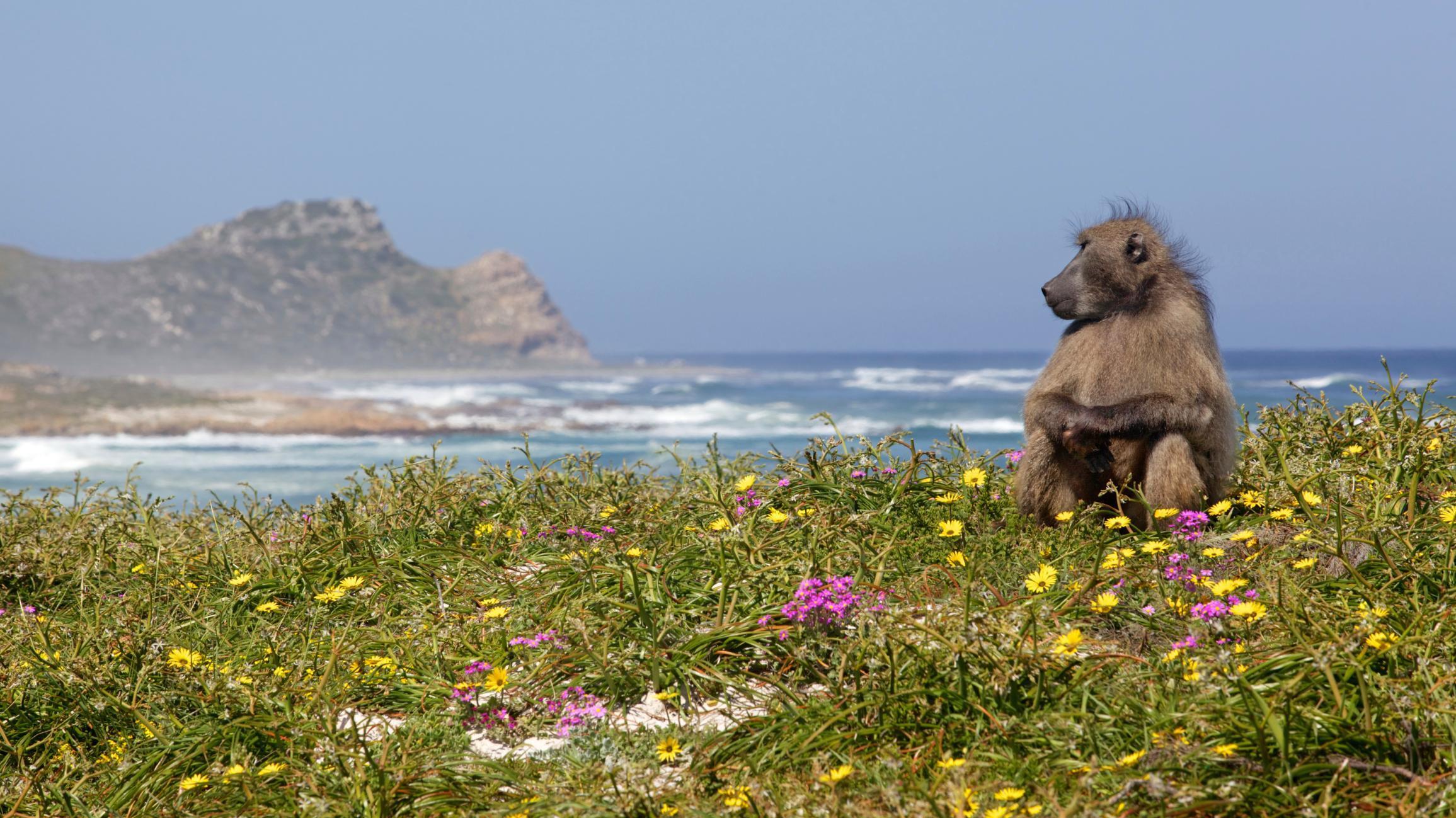 Wildlife Safari Tours from Cape Town