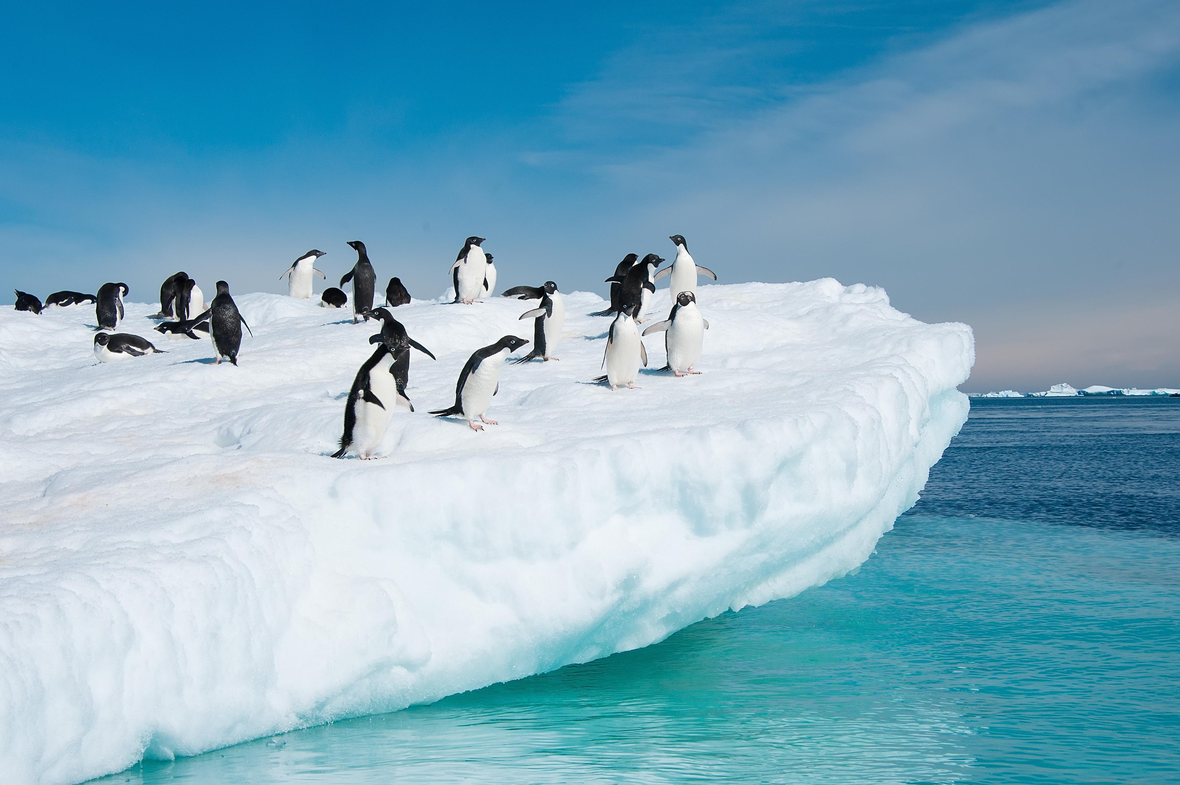 Antarctica Tours from Ushuaia