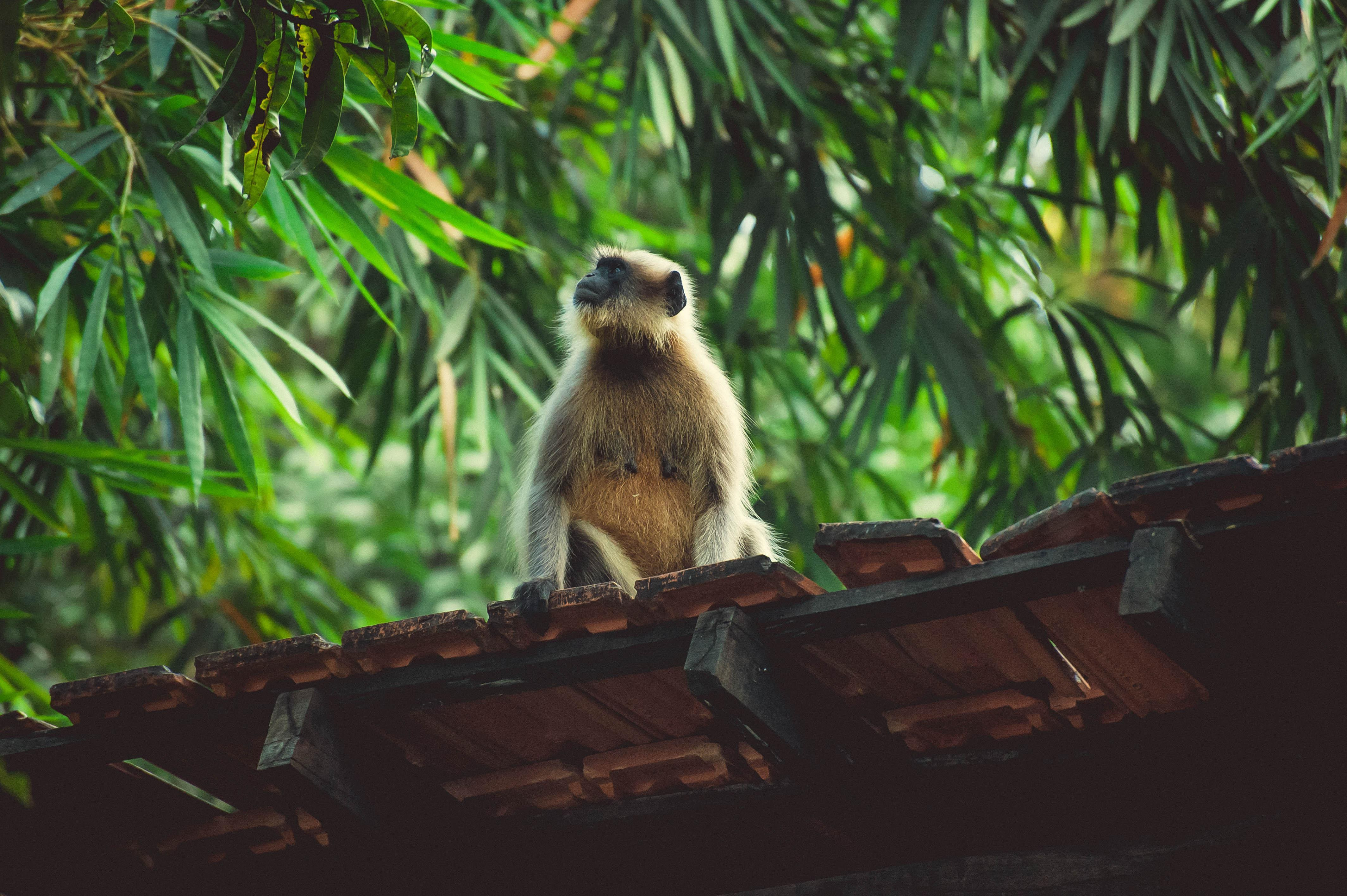 Where to See Wildlife in Goa