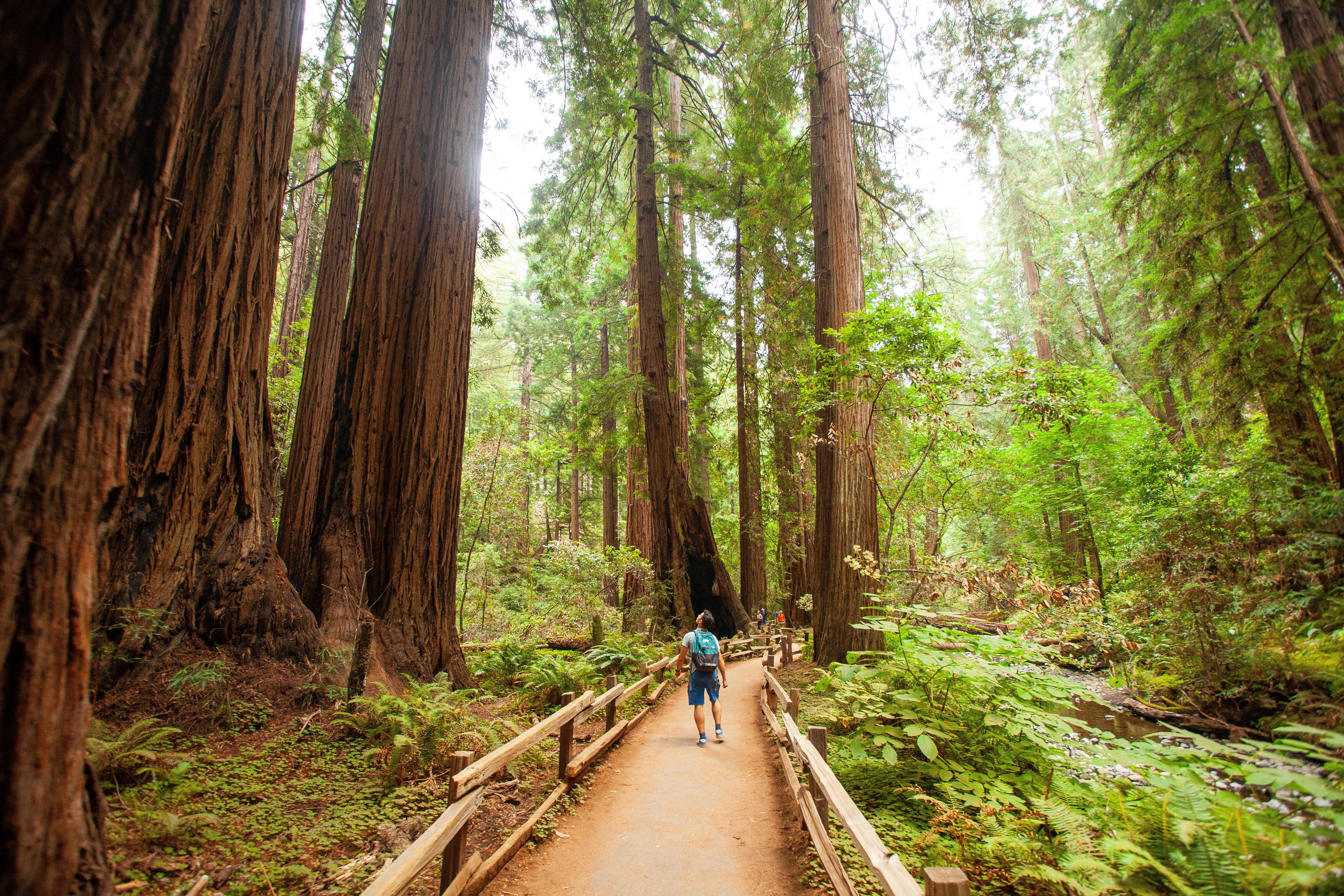 Guide to Marin County: Sausalito, Muir Woods, and More