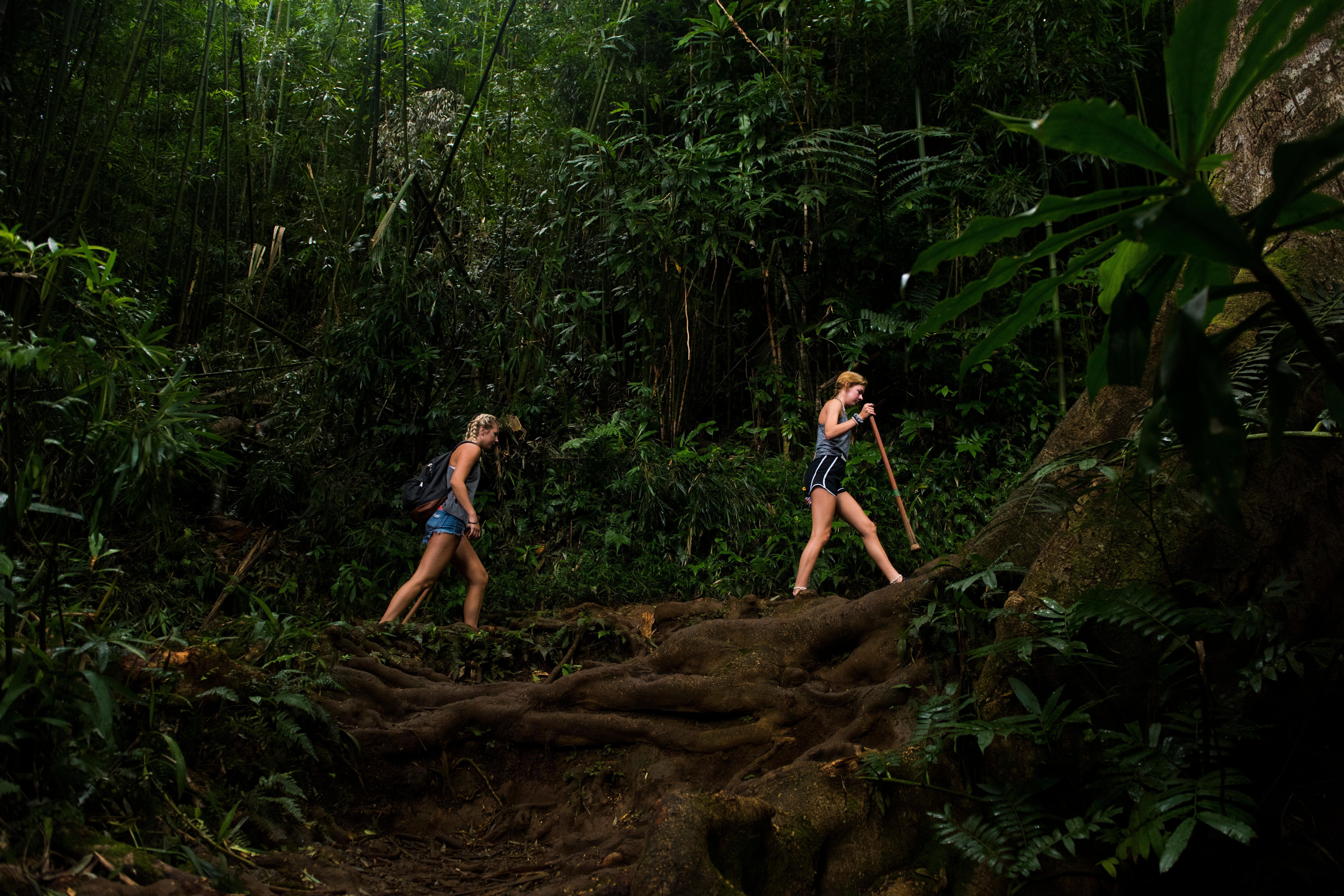 Rain Forest Tours on Oahu