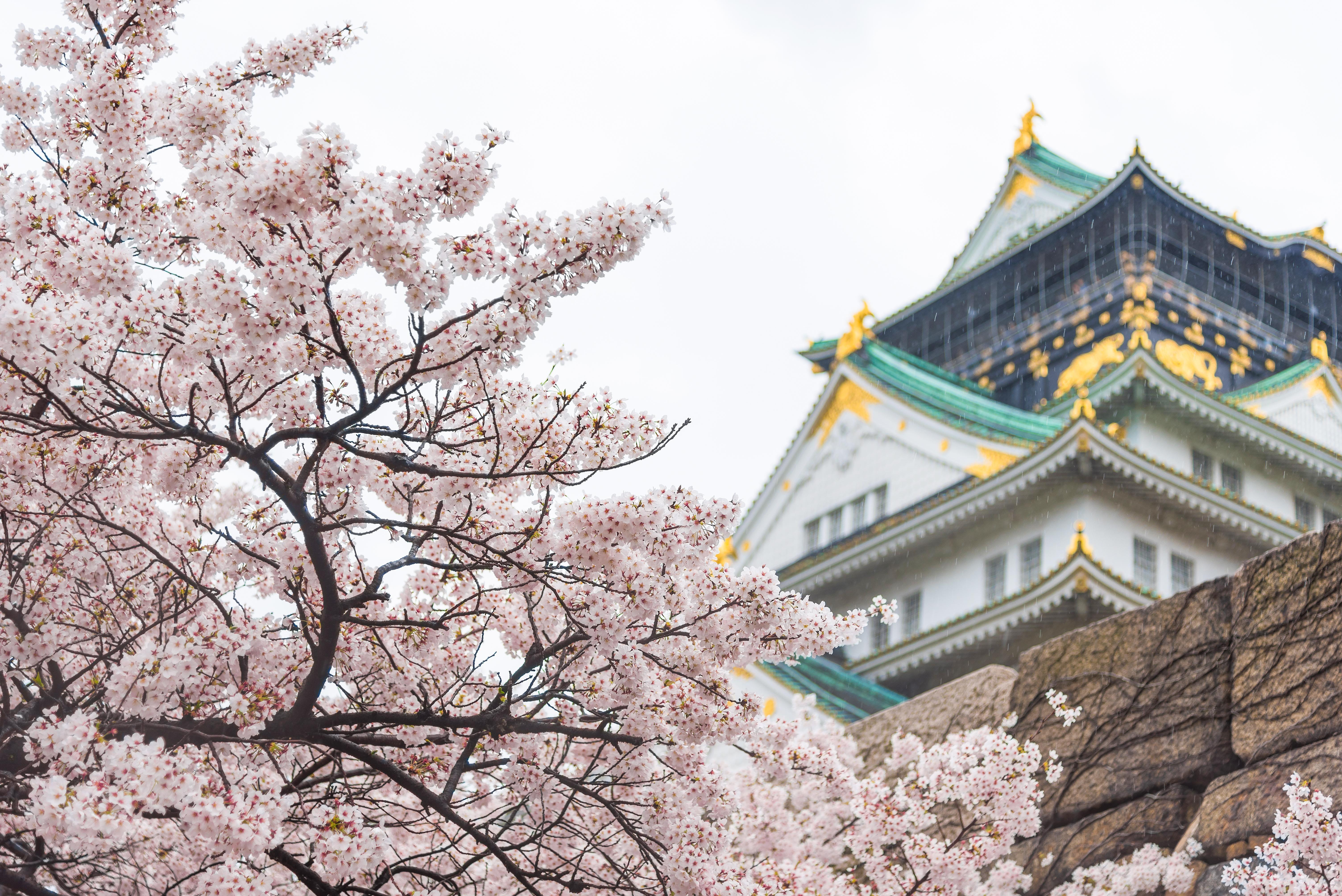 How to Experience Cherry Blossom Season in Osaka