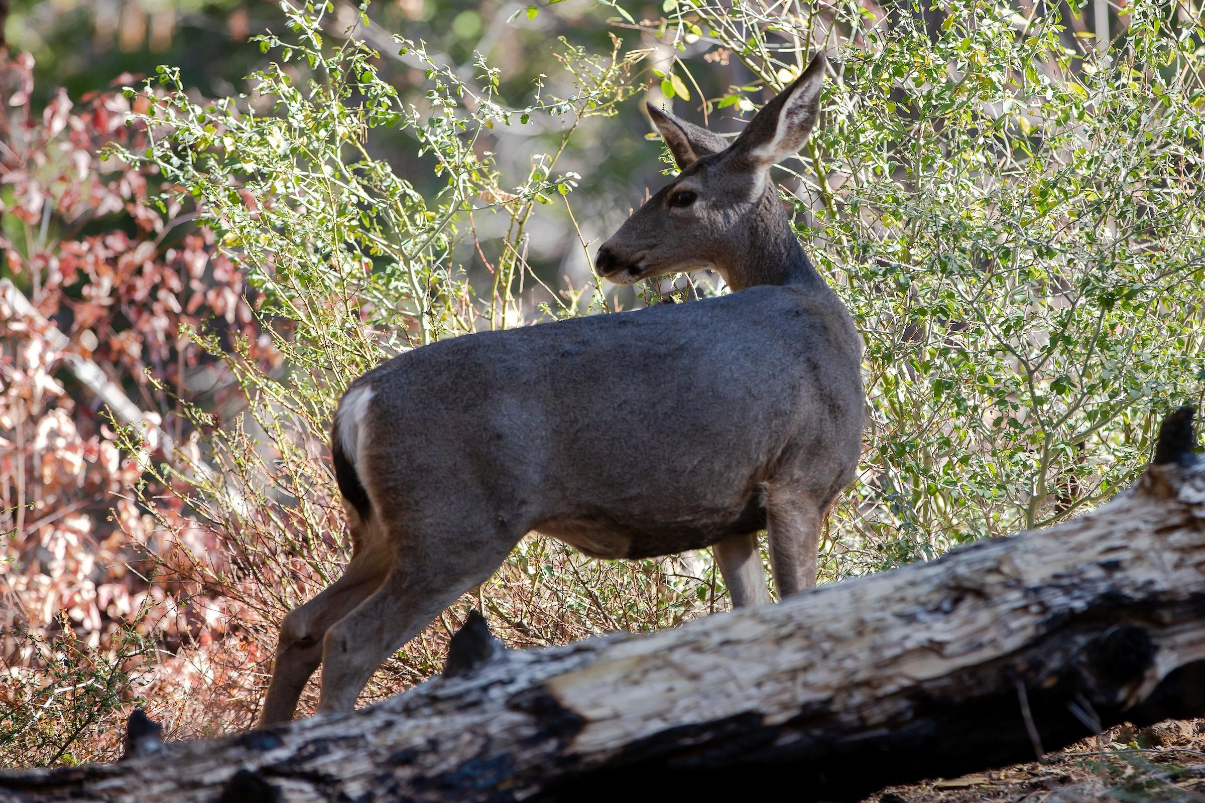 How to Spot Wildlife in Yosemite