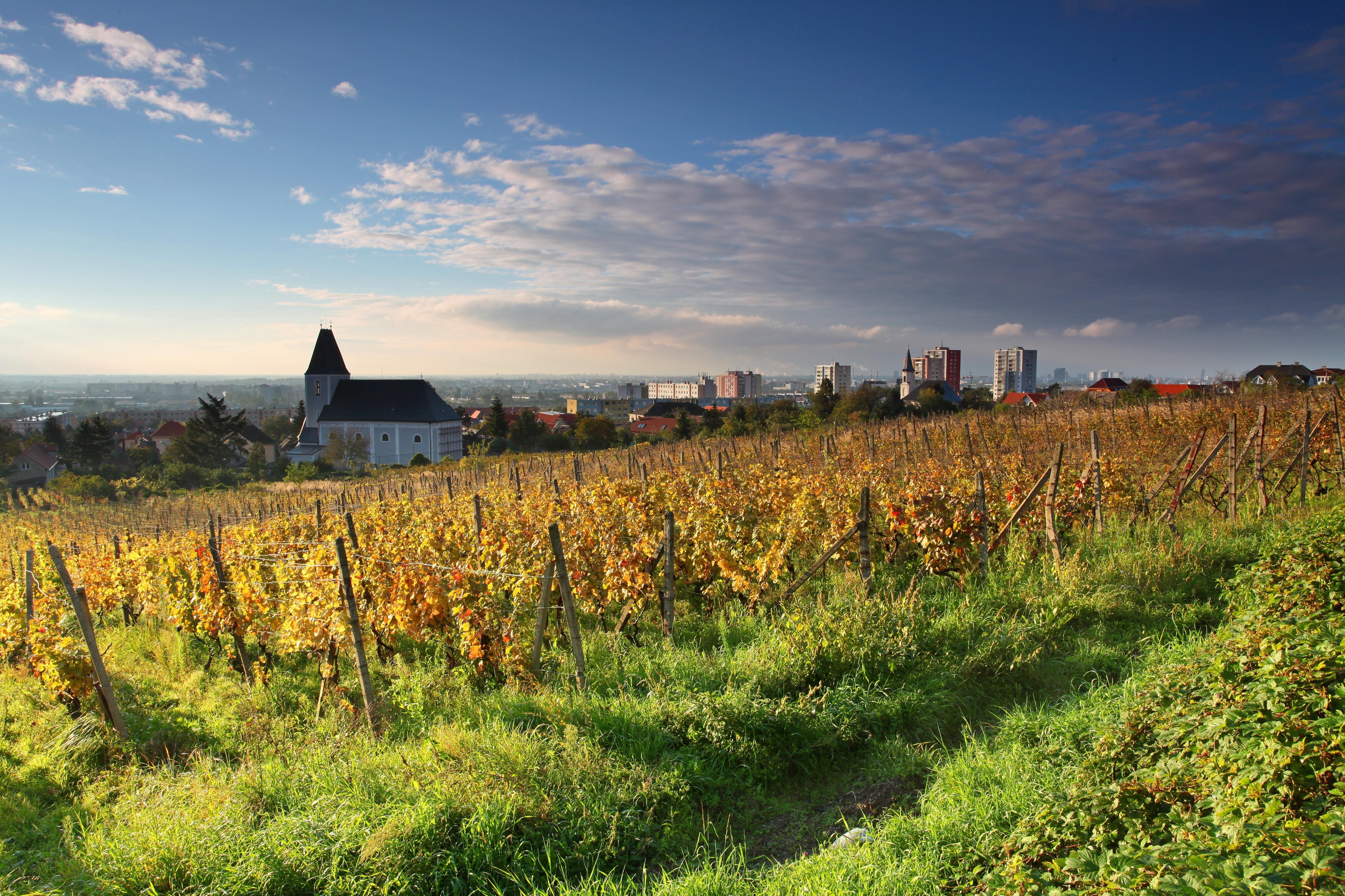 Wine Lover's Guide to Bratislava