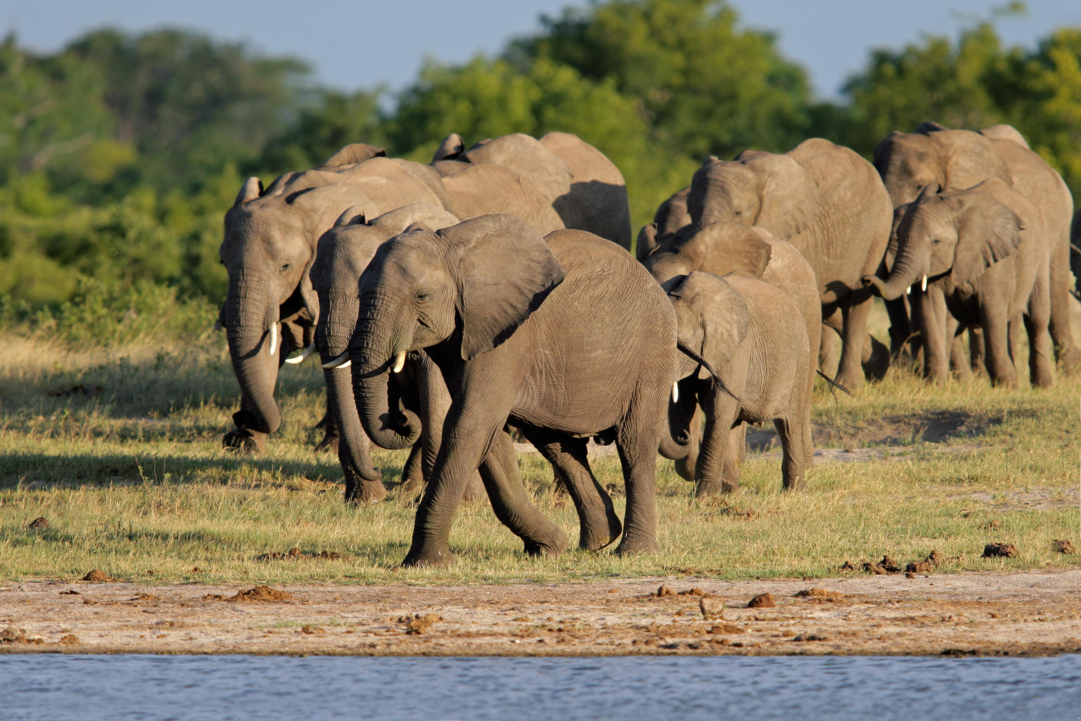 Top National Parks in Zimbabwe