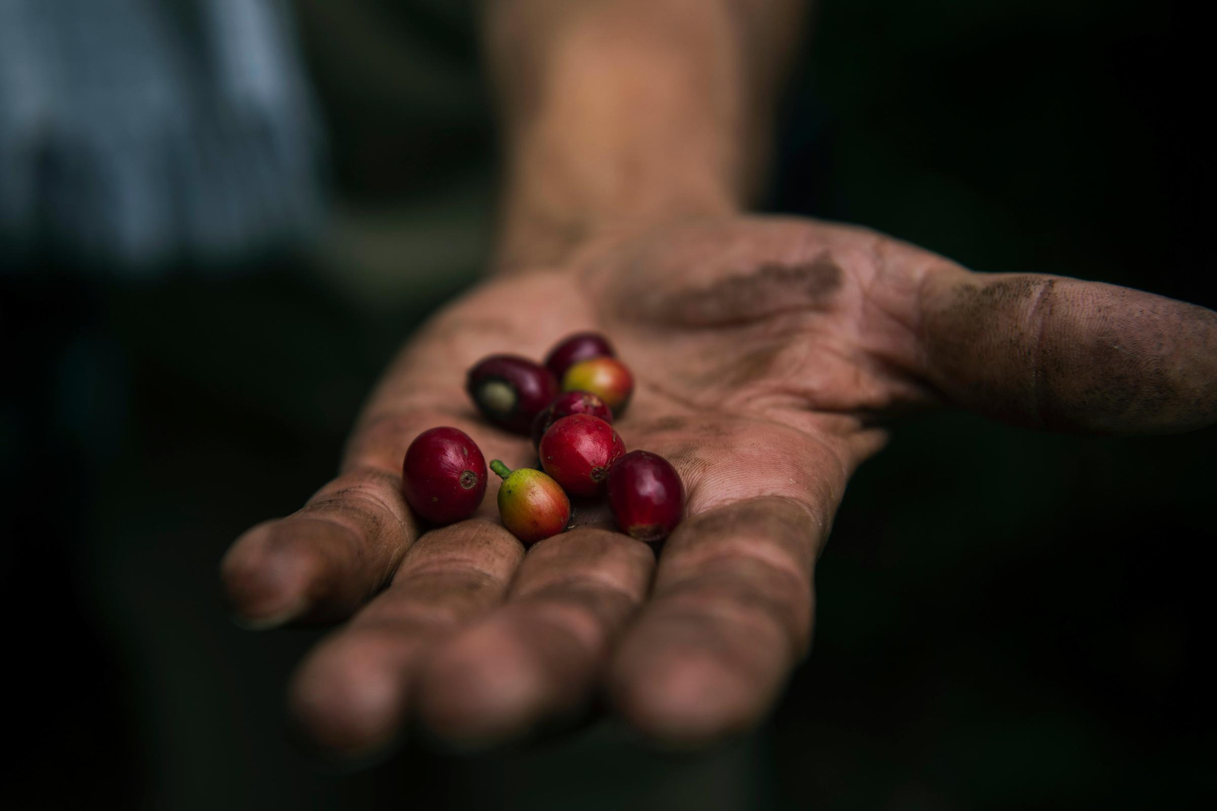 Colombian Coffee Tours in Medellín