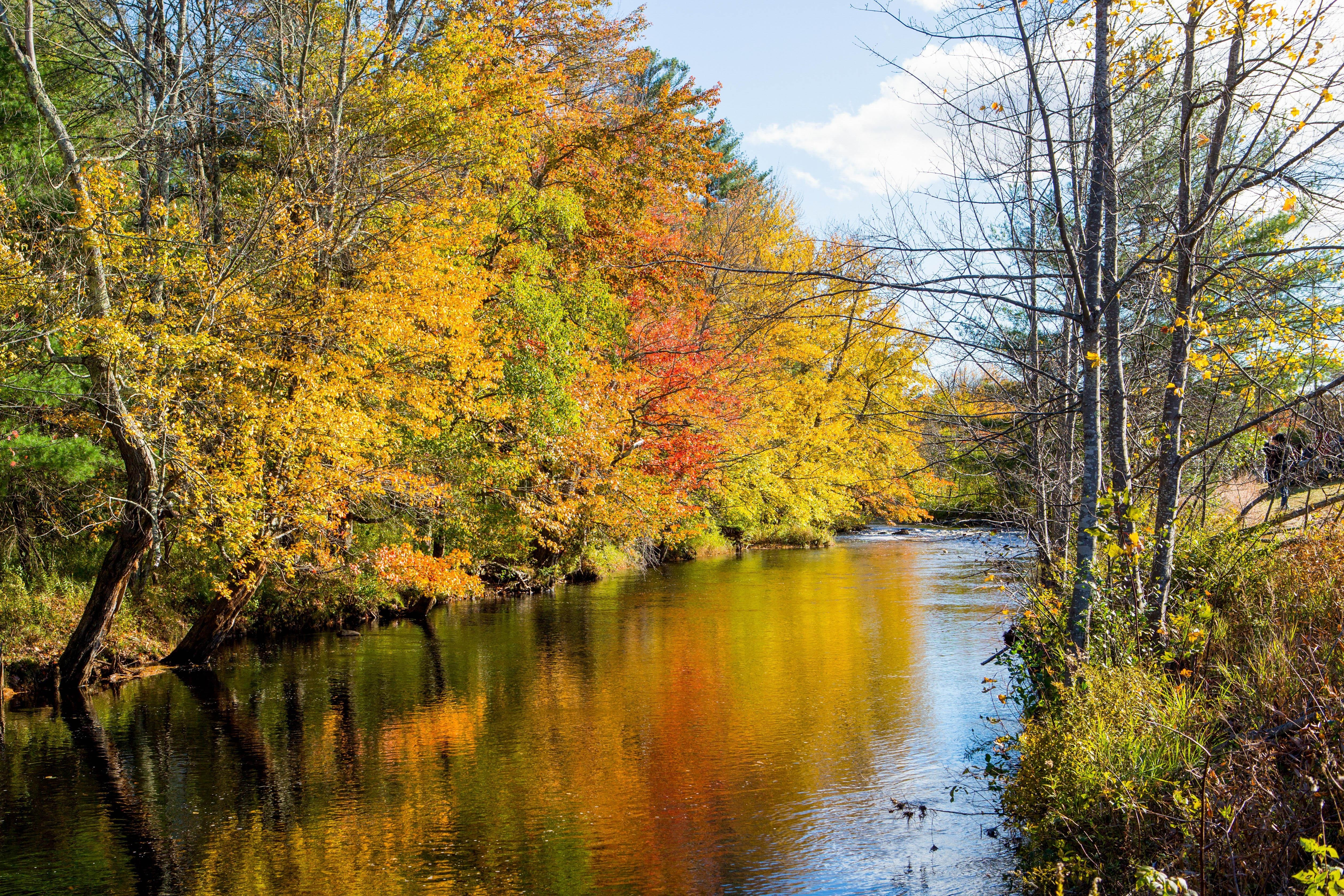 How to Experience Fall Foliage in Boston