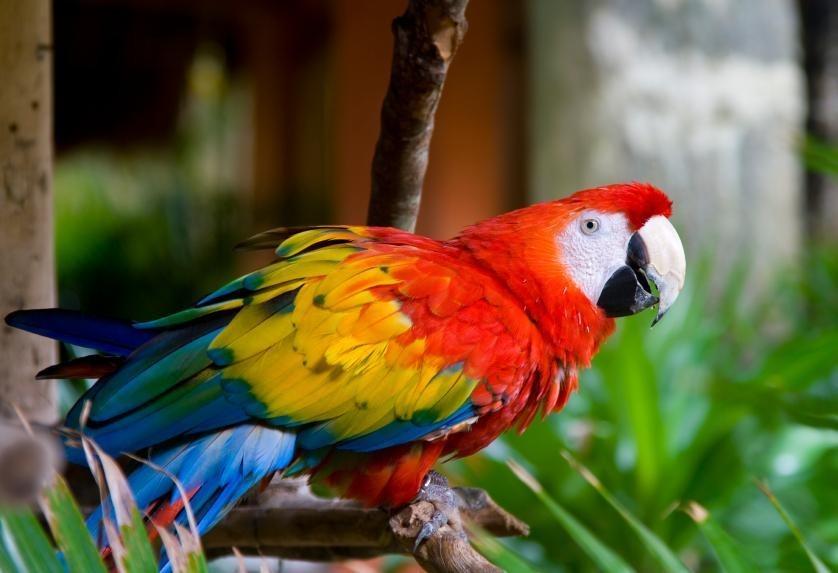 Macaw Clay Licks in the Peruvian Amazon Rainforest