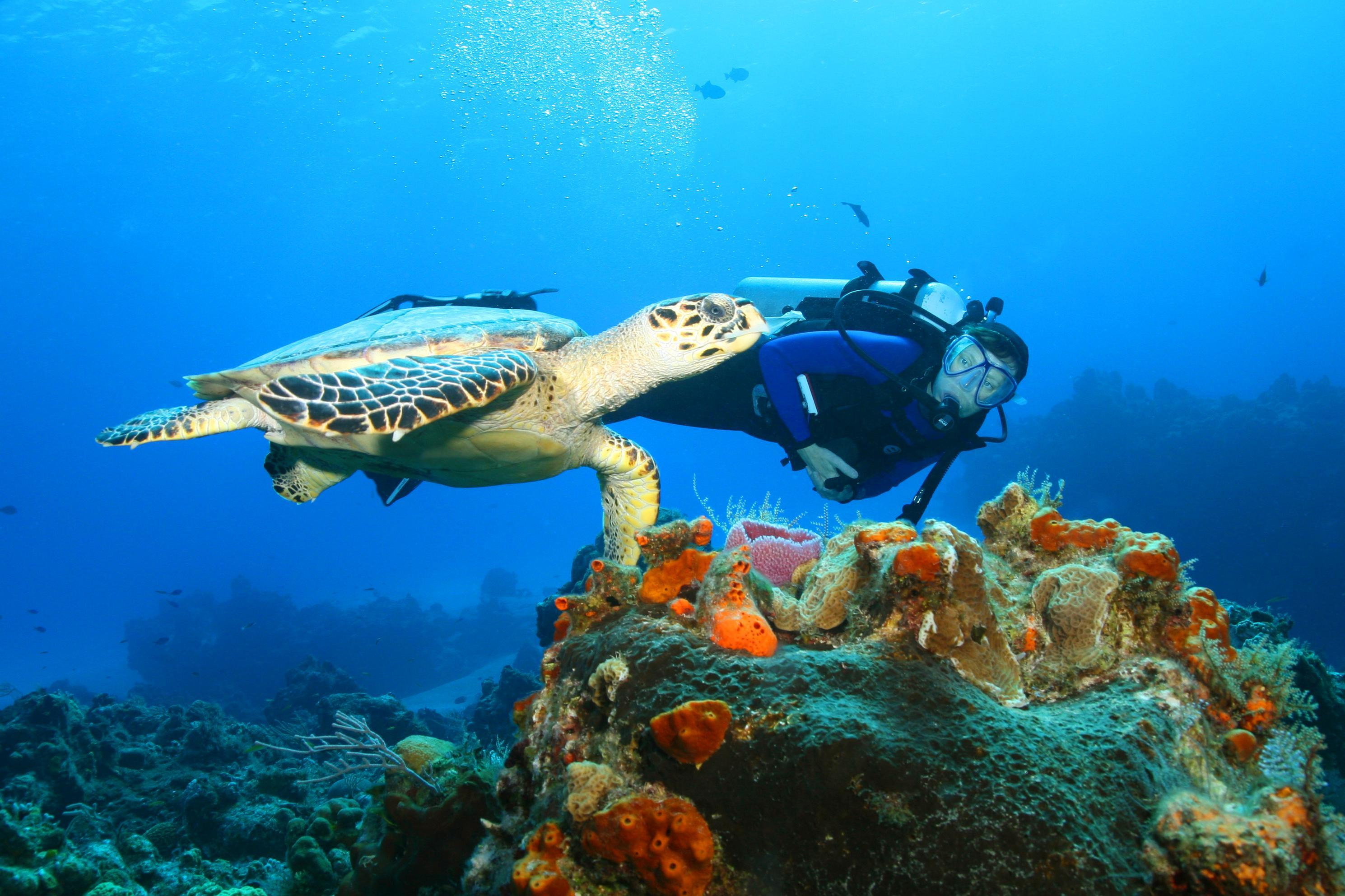 Cozumel Day Trips from Cancun
