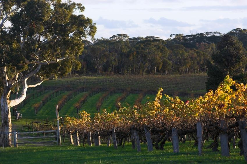 How to Spend 3 Days in the Barossa Valley