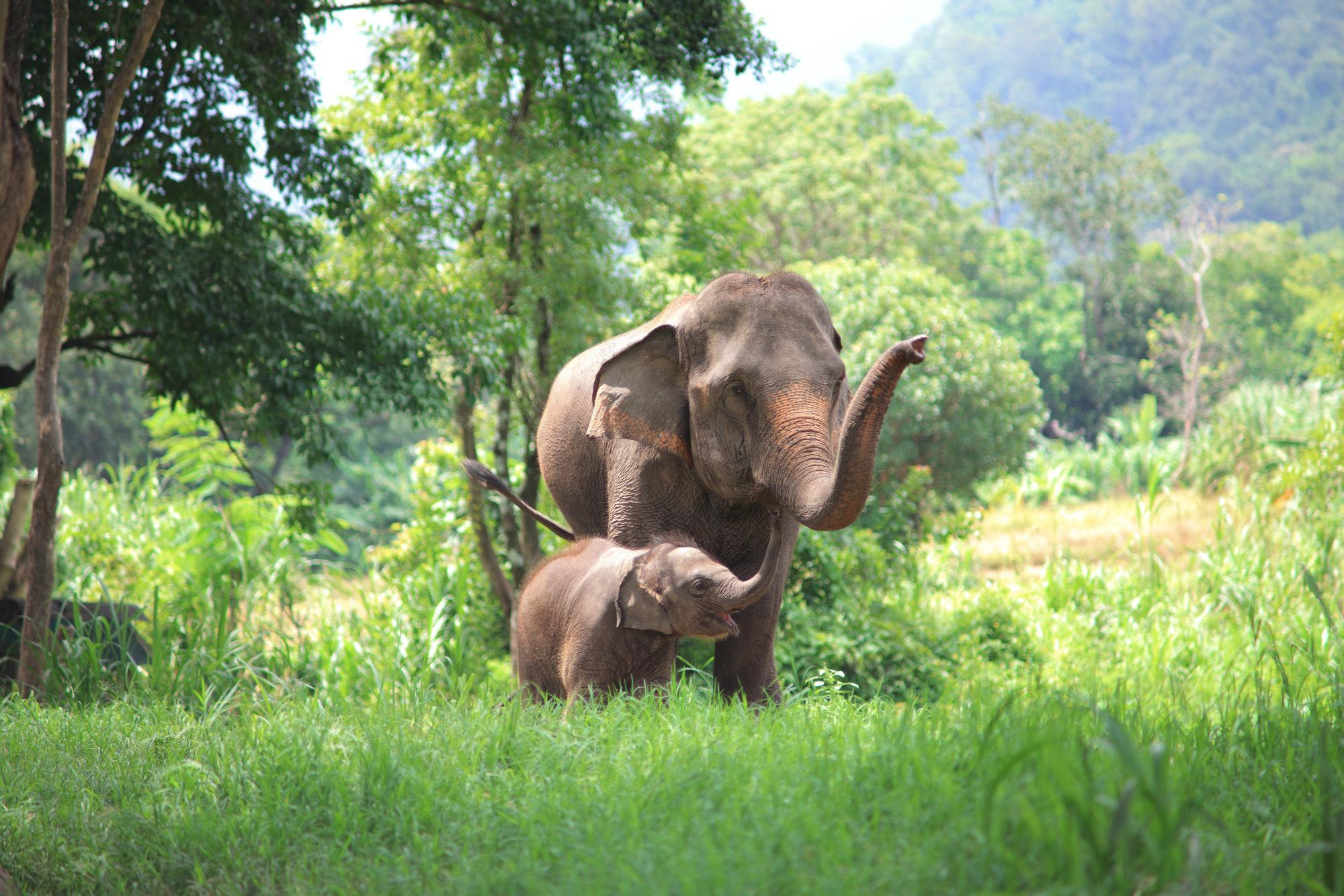 Elephant Conservation in Chiang Mai