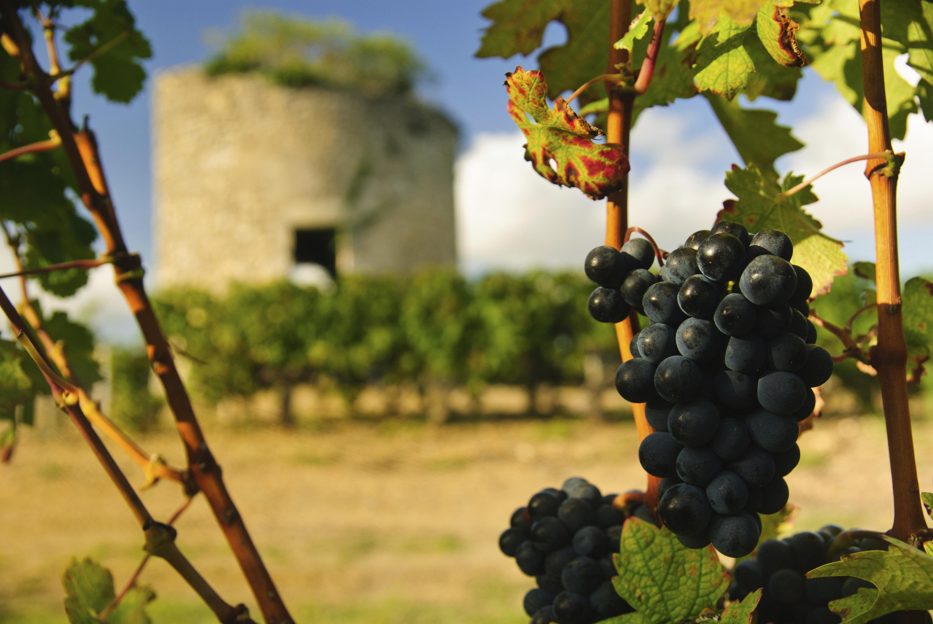 Médoc Wine Tasting from Bordeaux