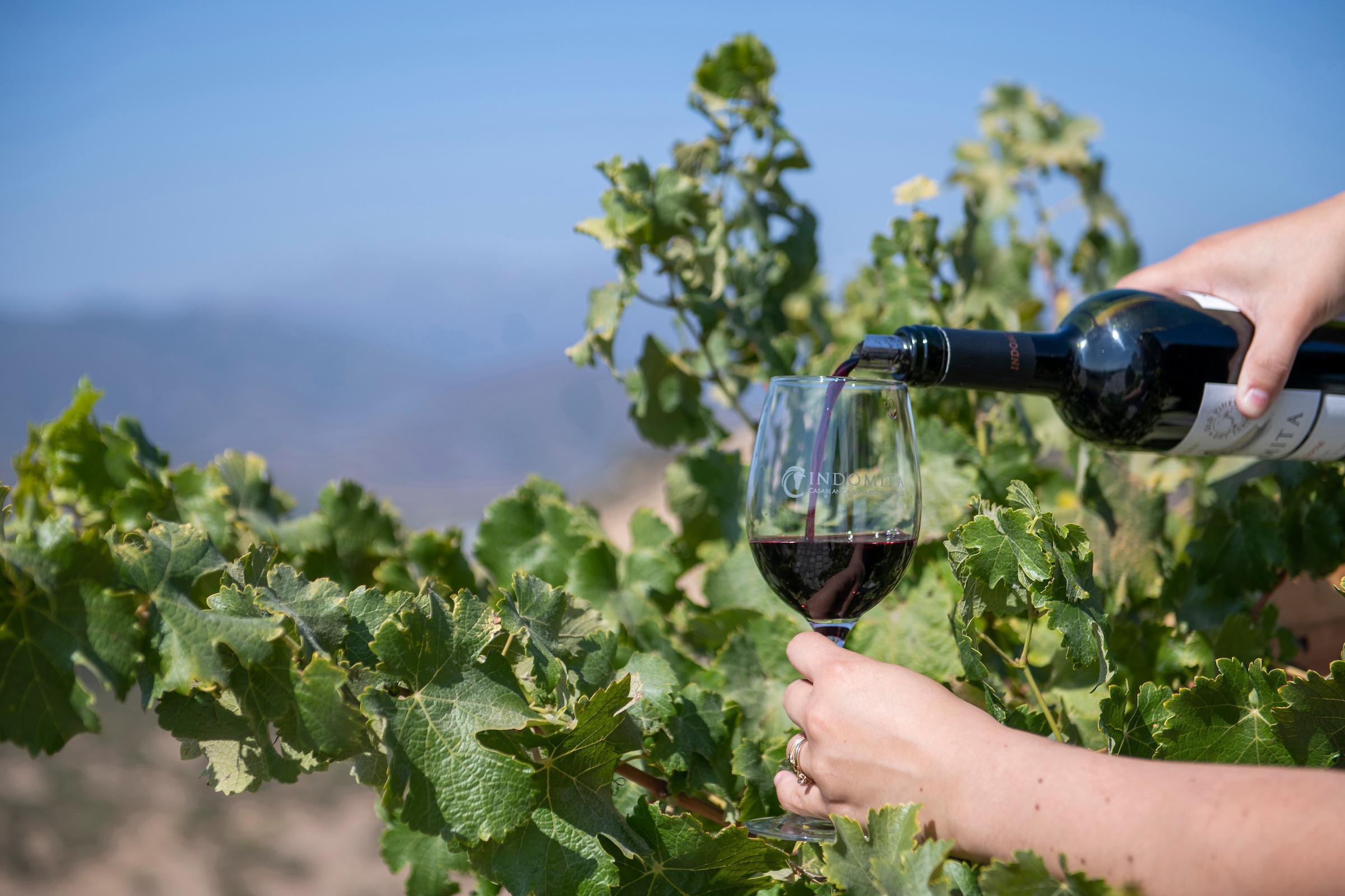 Wine Tasting from Valparaiso