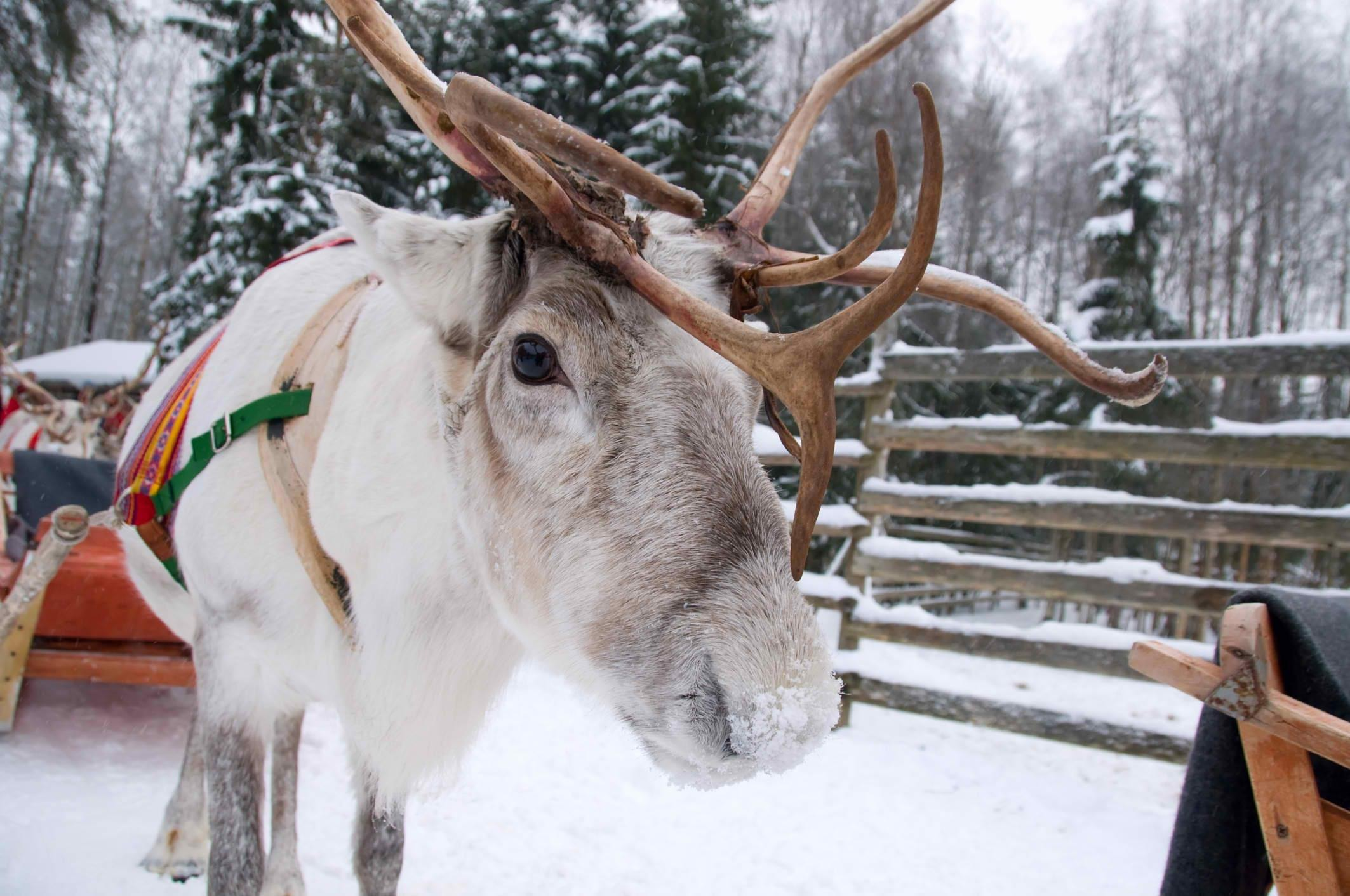 How to Spend 1 Day in Rovaniemi