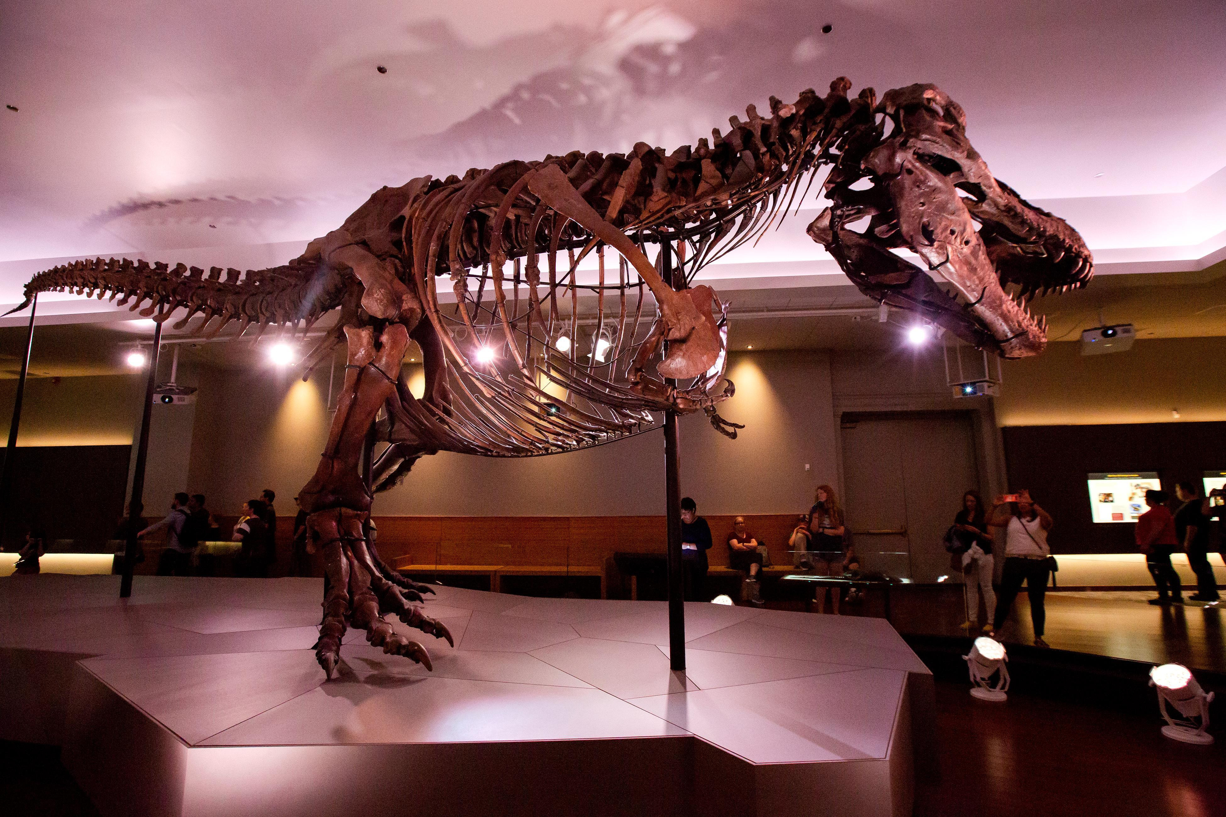 Must-See Museums in Chicago
