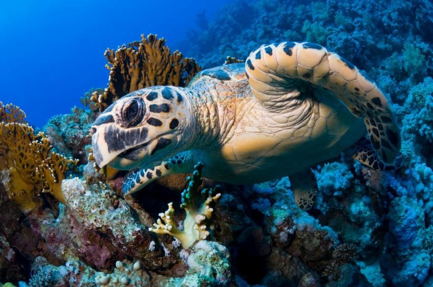 Top Diving Spots in Sharm El Sheikh for Advanced Scuba Divers