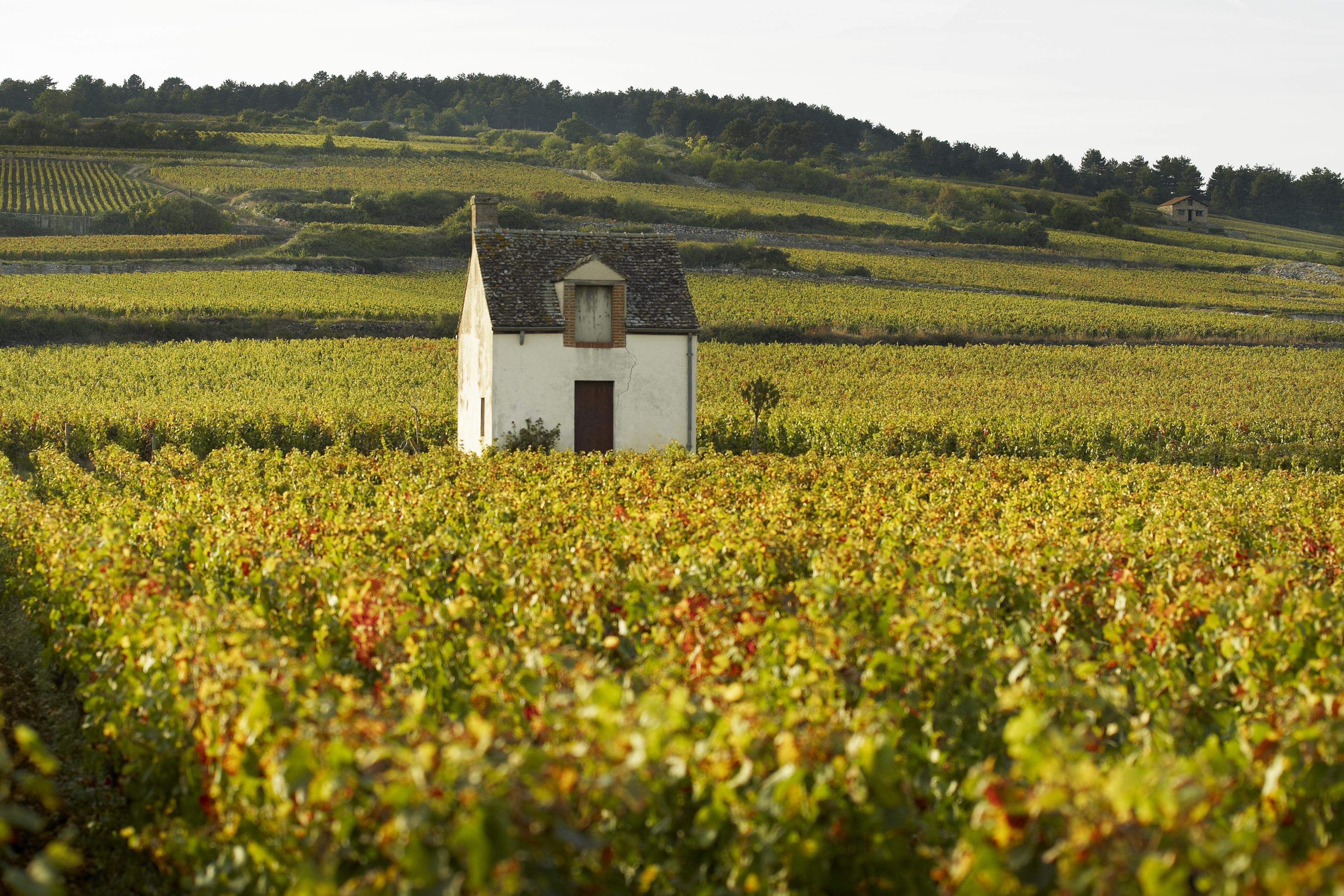 How to Spend 1 Day in Beaune