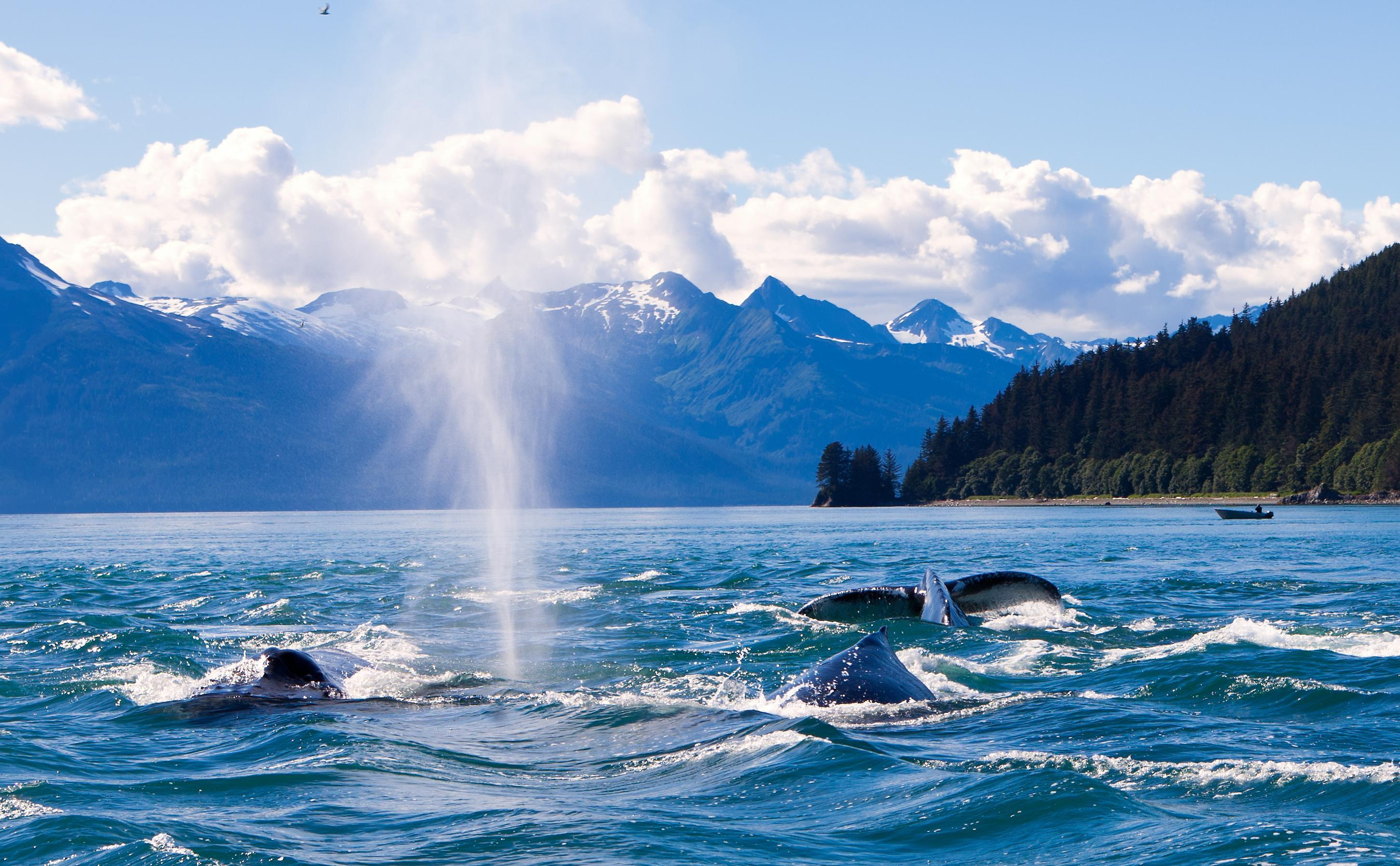 How to Spend 1 Day in Juneau