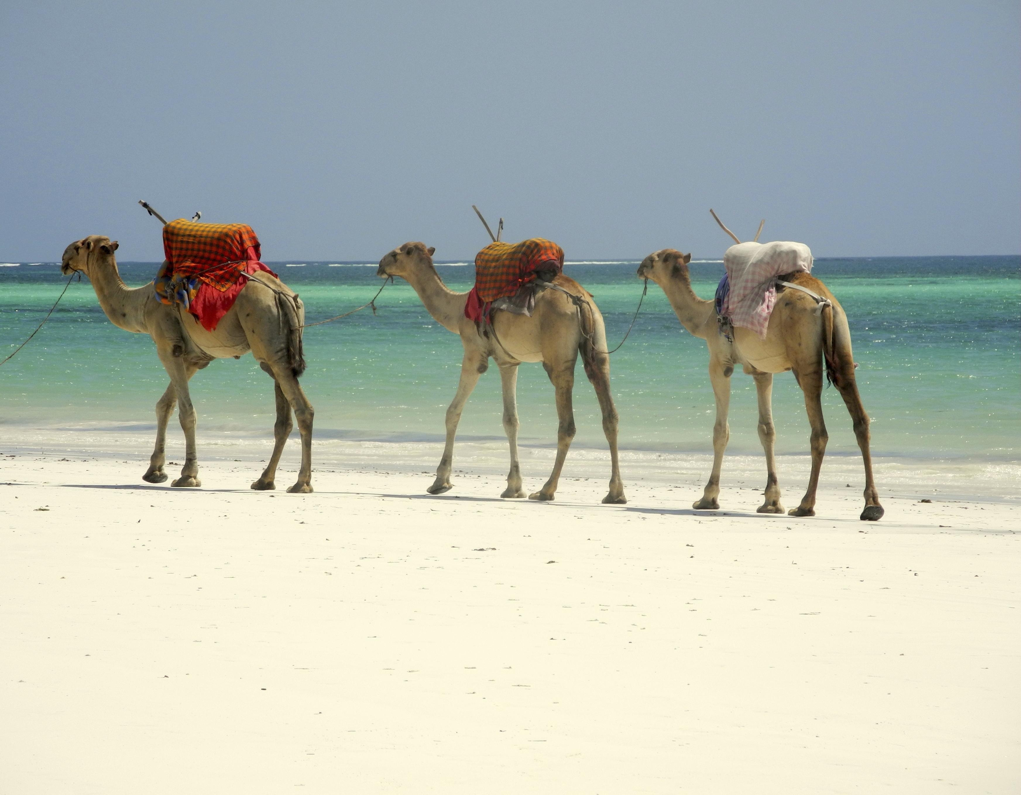 How to Spend 1 Day in Mombasa