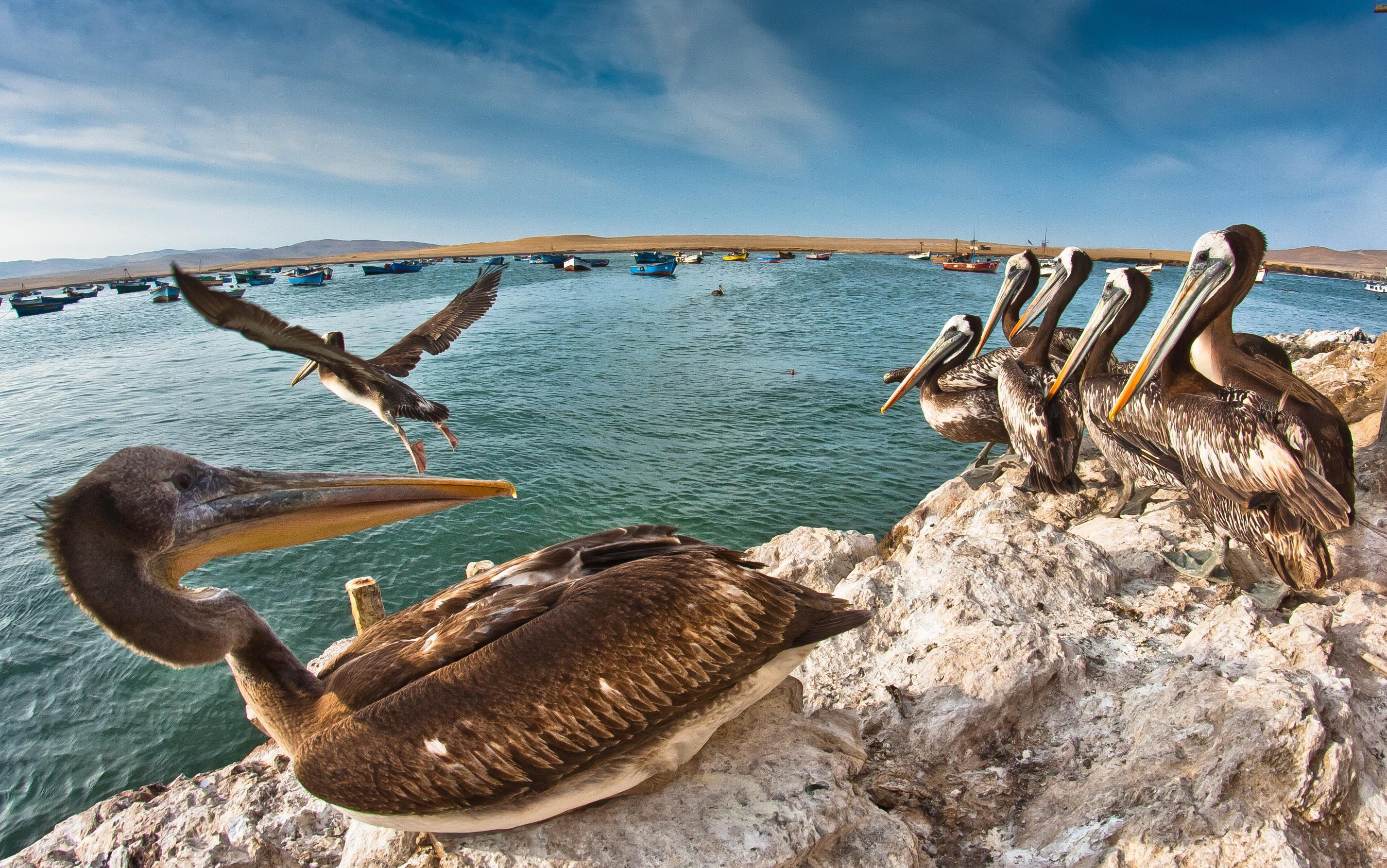How to Spend 1 Day in Paracas