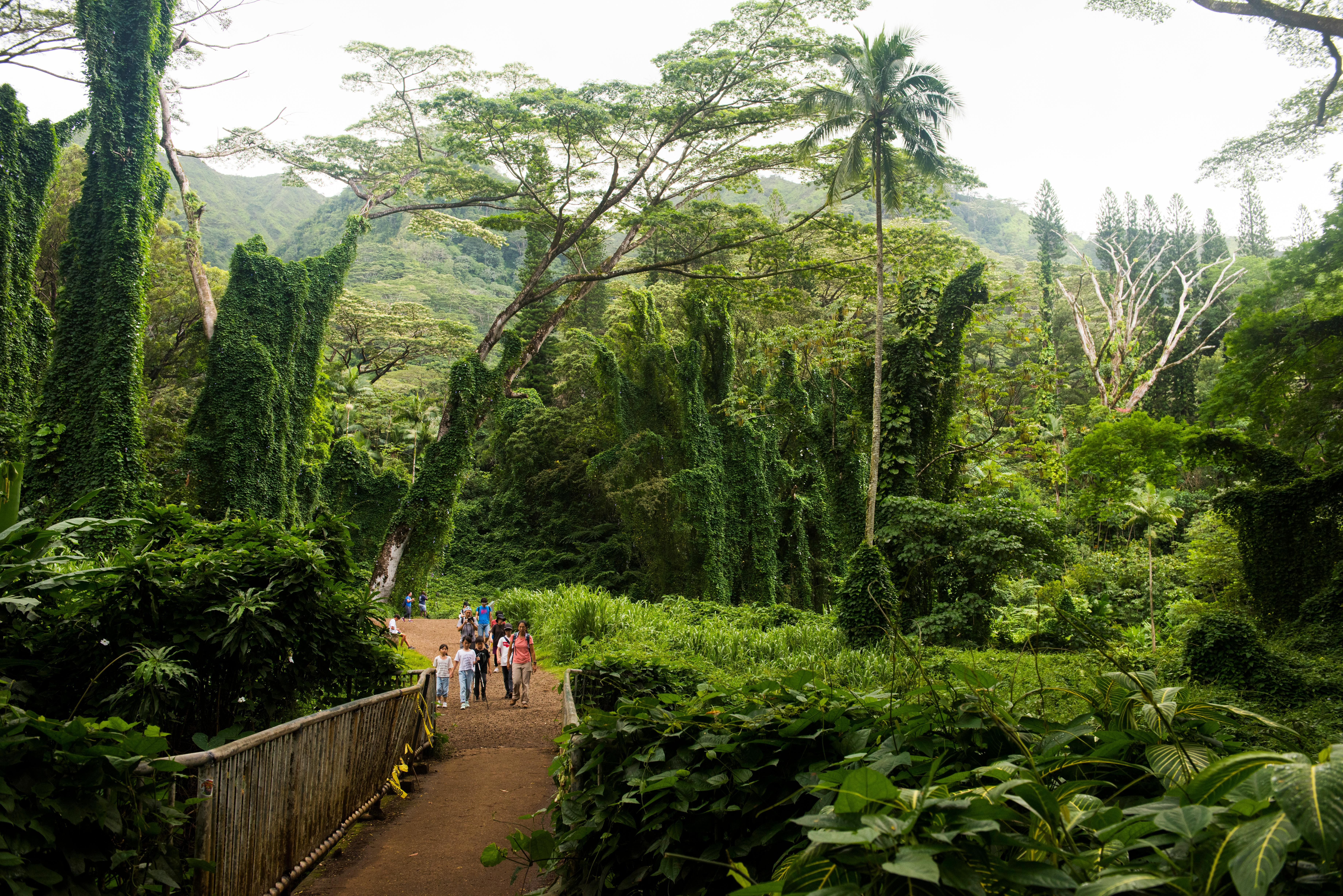 Things to Do on Oahu This Fall
