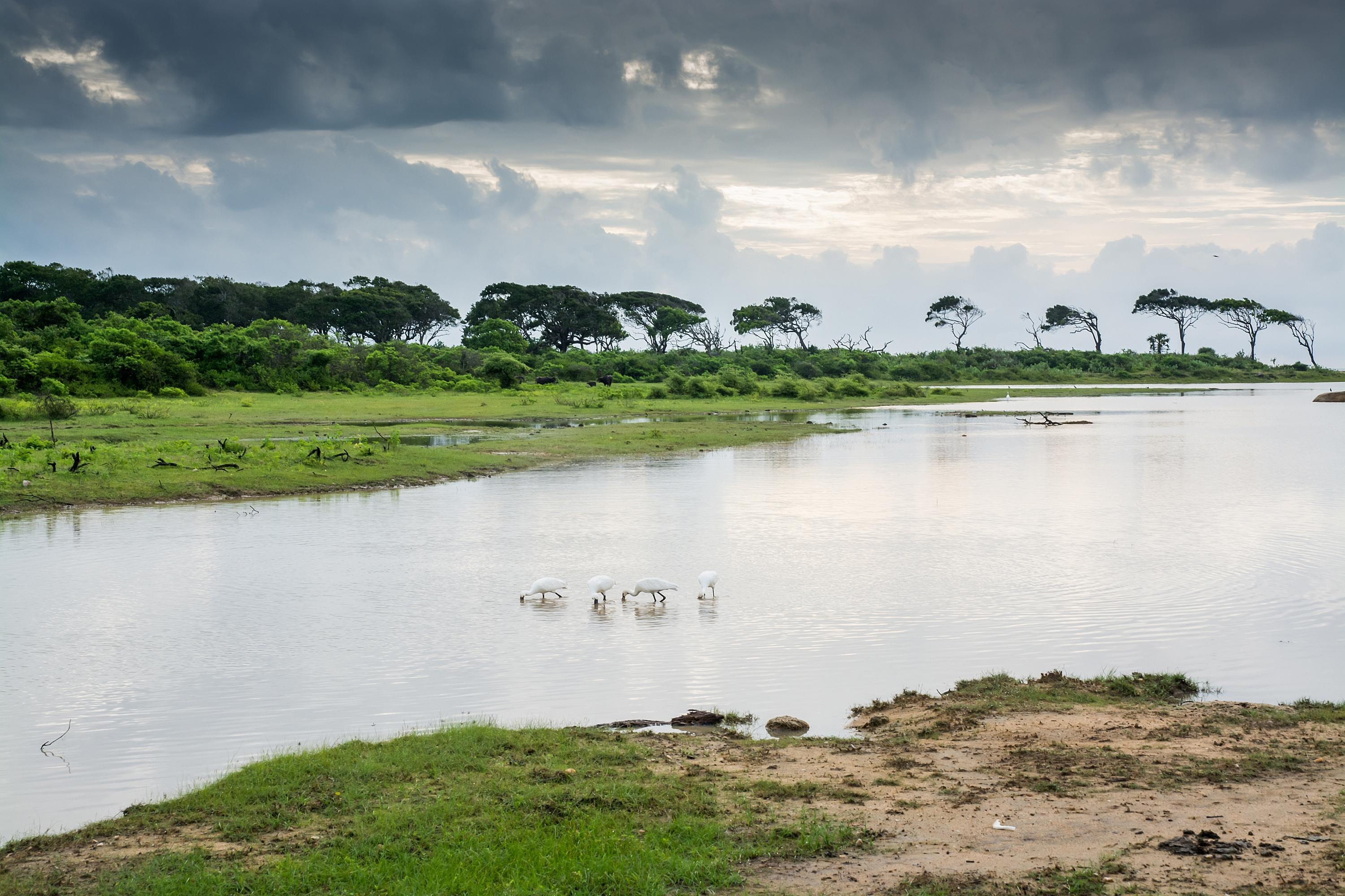 How to Spend 1 Day in Yala National Park