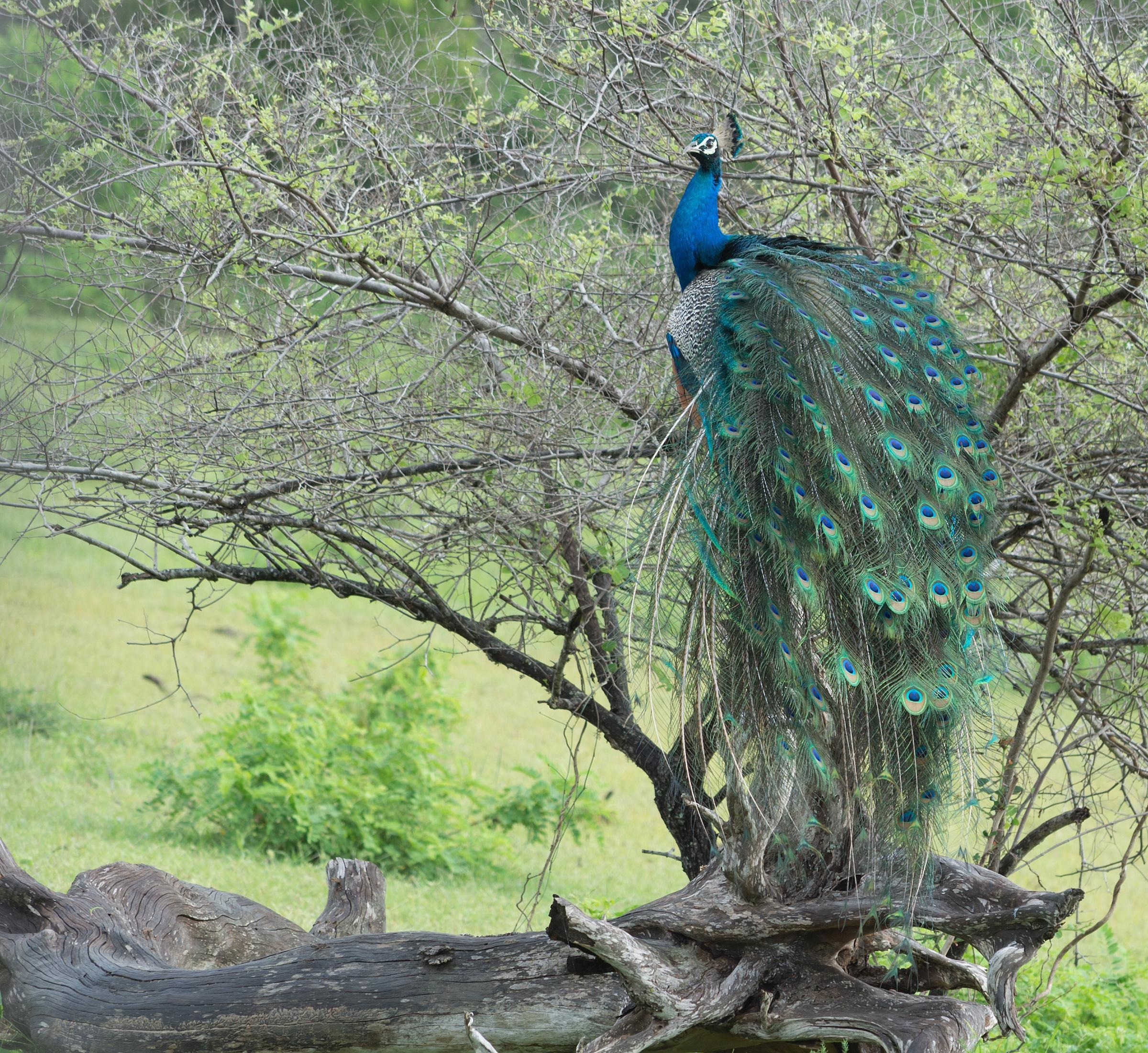 How to Spend 2 Days in Yala National Park