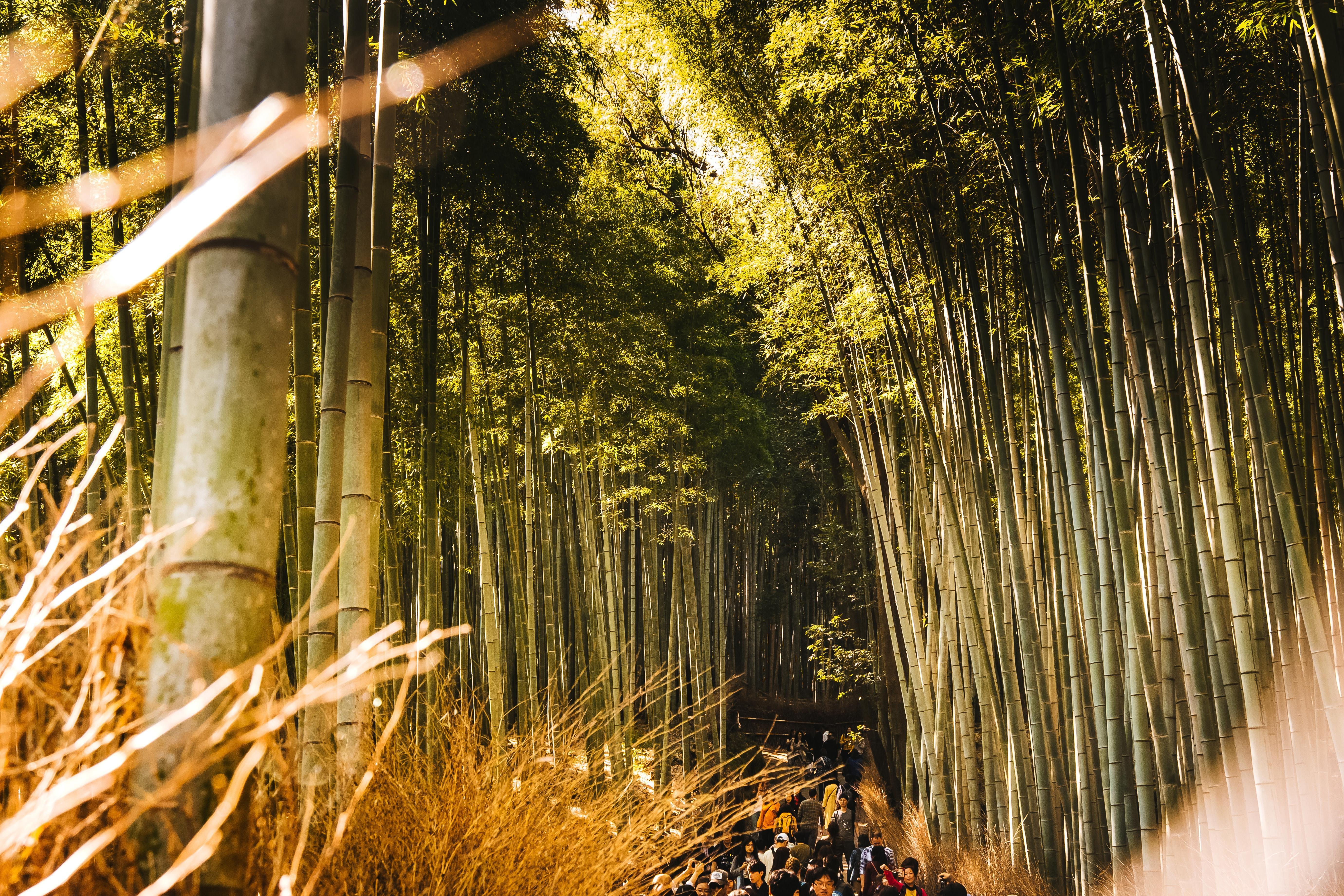 Where to Find the Best Views in Kyoto