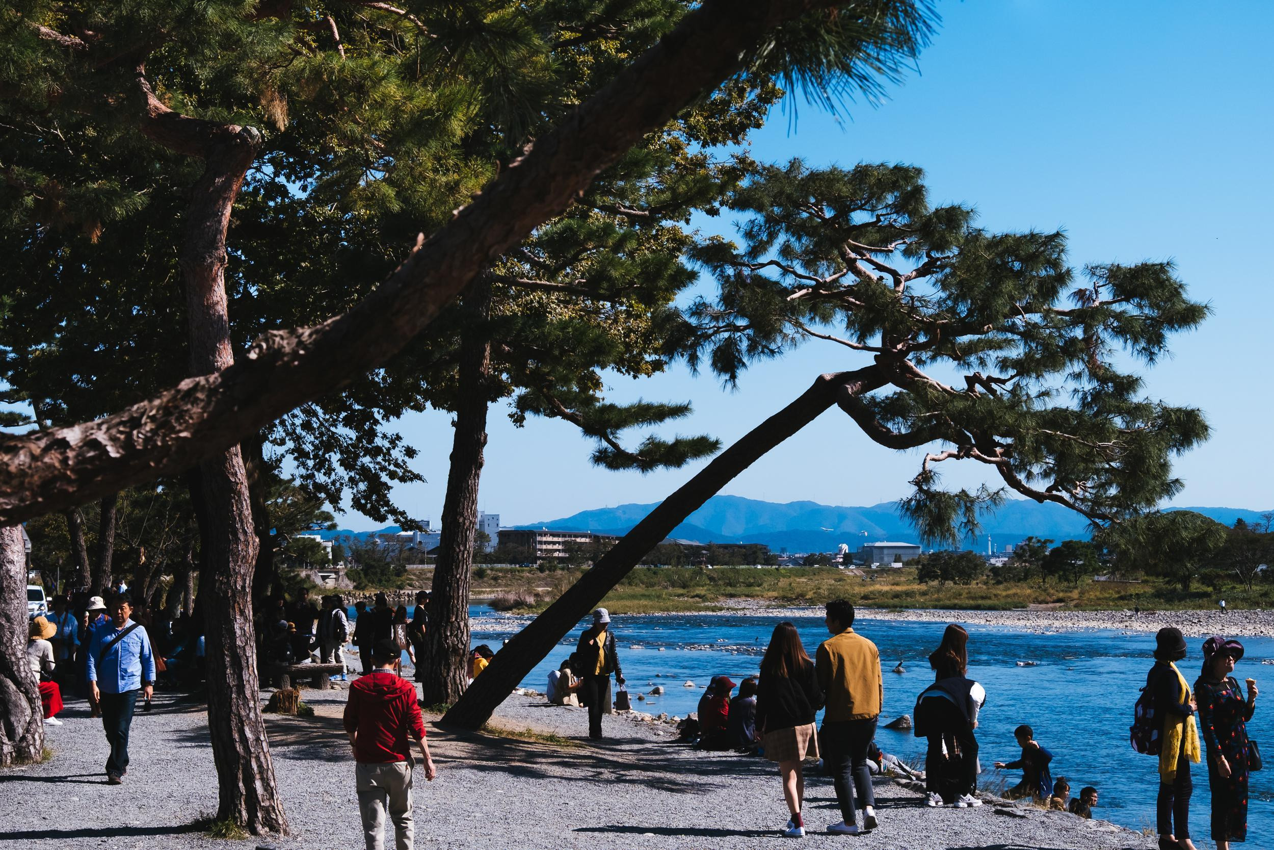 Sightseeing on a Budget in Kyoto