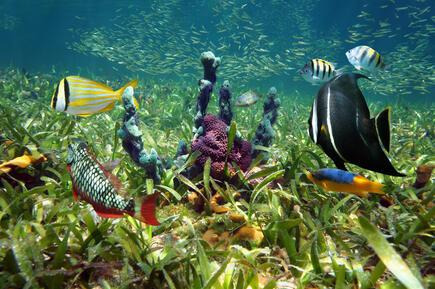 Top Snorkeling and Scuba Diving Spots in Key West