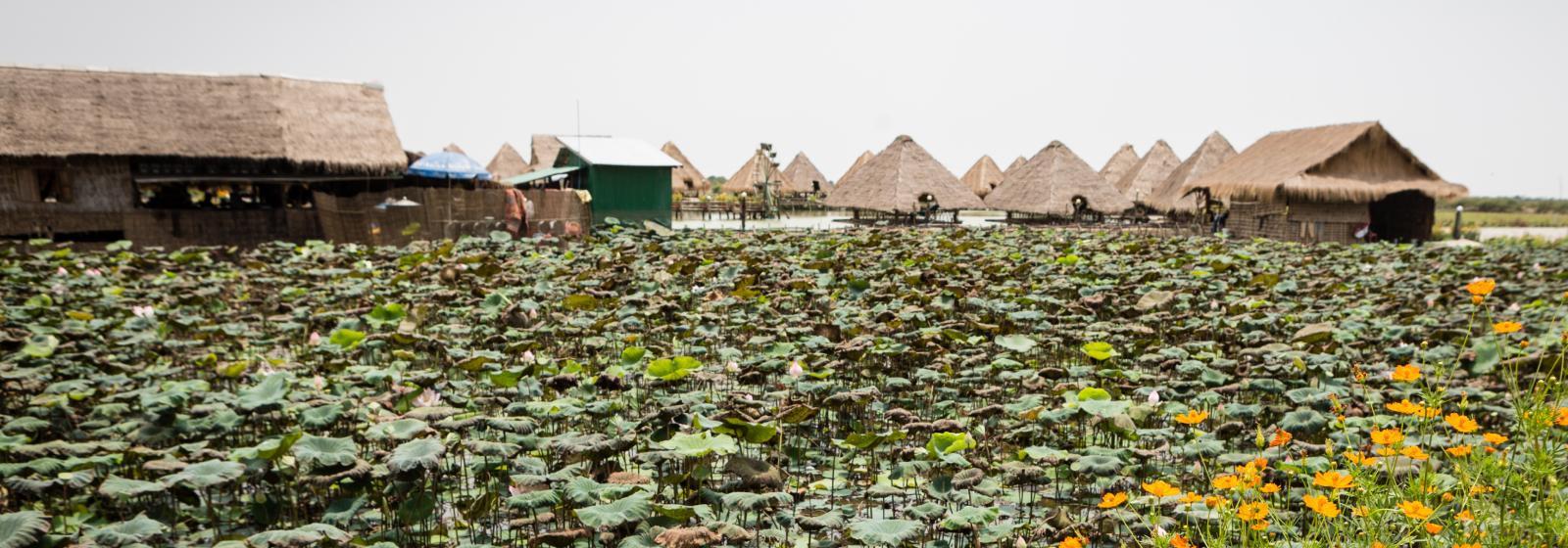 Cosas que hacer en Siem Reap