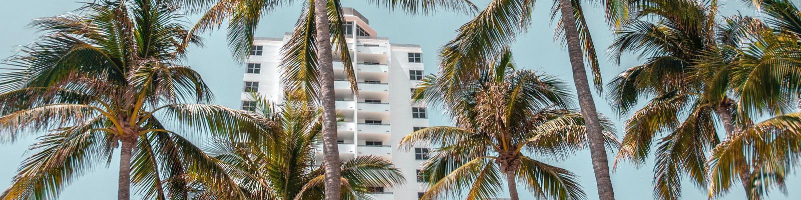 Palm trees in Miami Beach, Florida