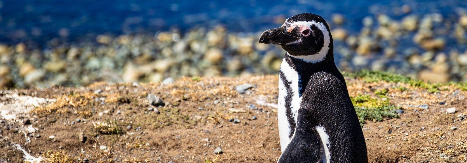 Things to do in Punta Arenas