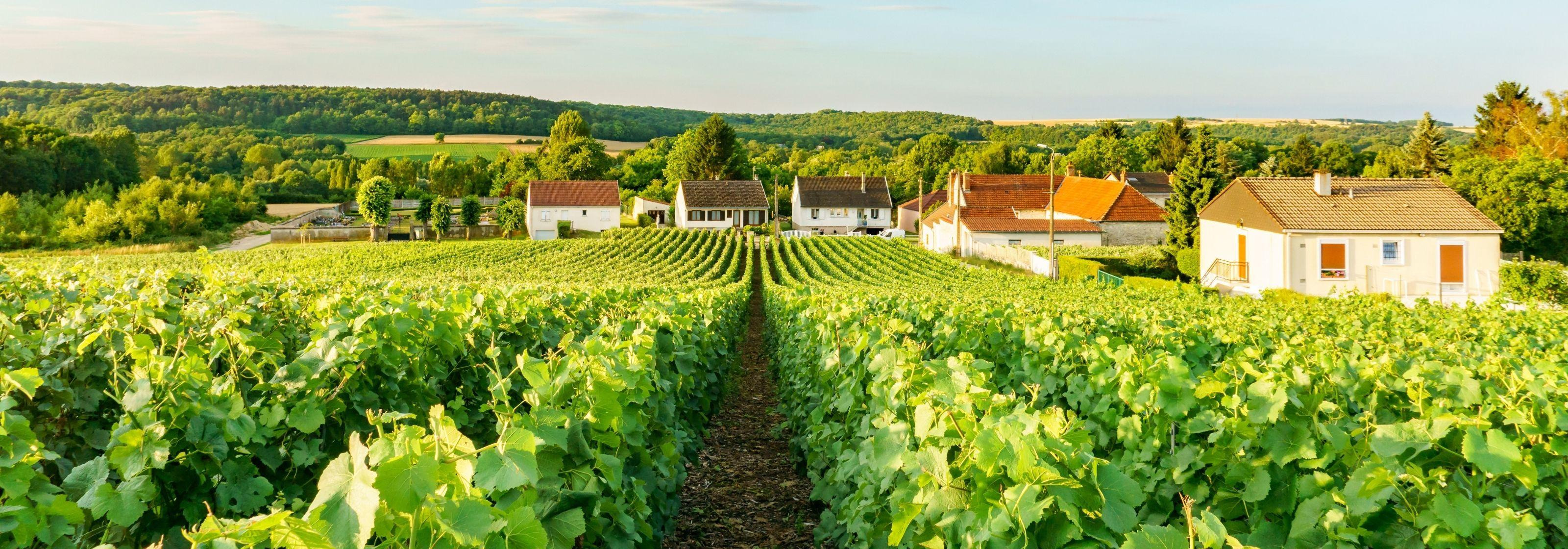 Things to do in Champagne