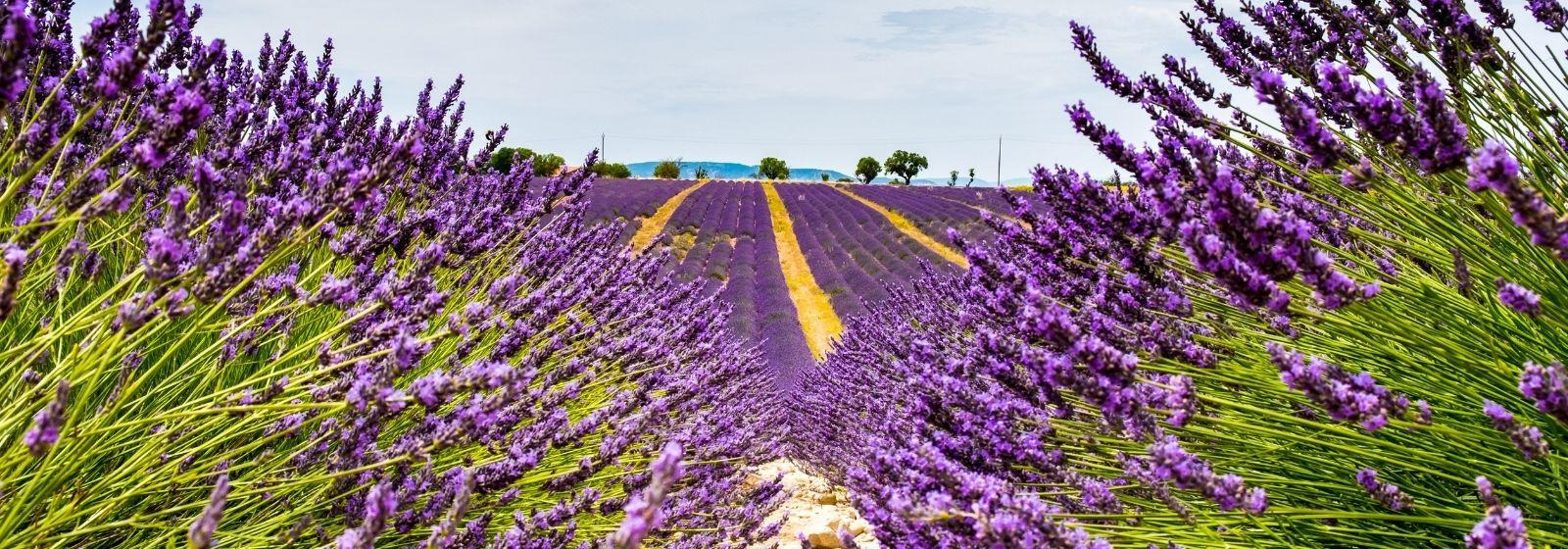 Things to do in Aix-en-Provence