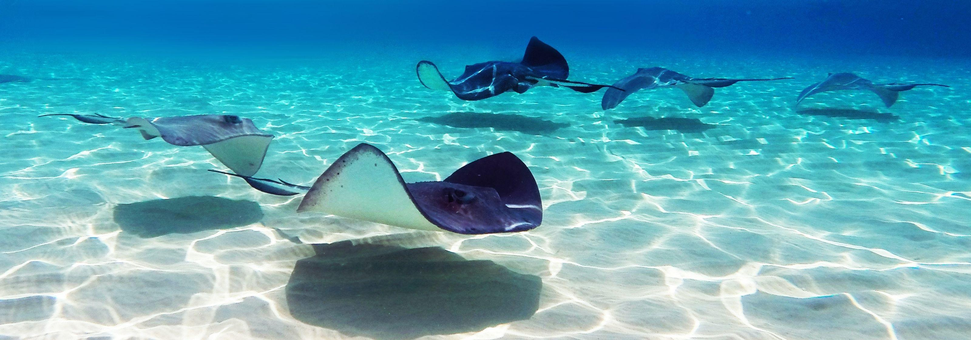 Things to do in Cayman Islands