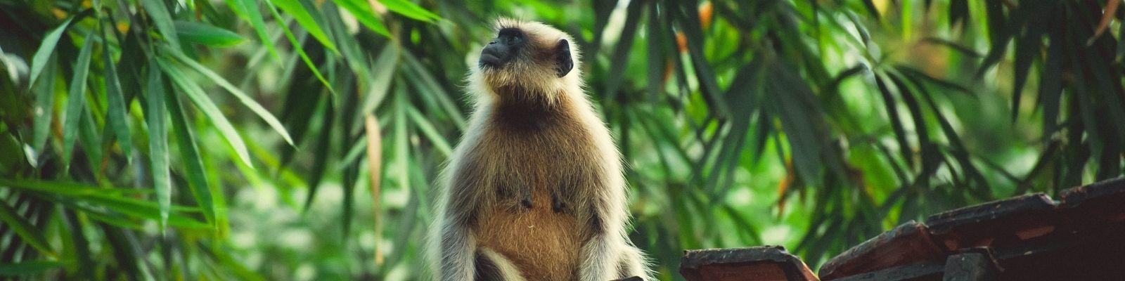 Where to See Wildlife in Goa