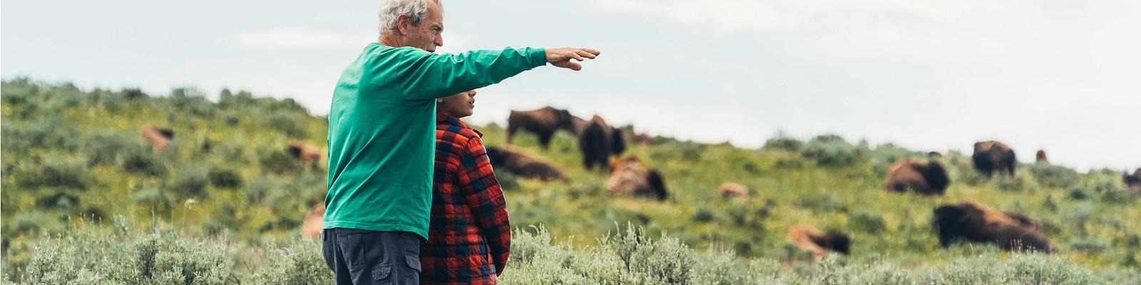 Travelers looking out over grazing bison in Yellowstone National Park