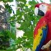 Zoos et réserves naturelles