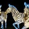 Zoos & Wildlife Parks