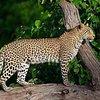 Nature and Wildlife