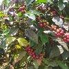 Coffee & Tea Tours