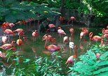 Ardastra Gardens, Zoo & Conservation Centre Admission Ticket