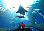 Pattaya Underwater World Tickets