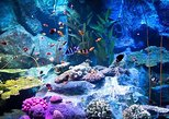 Pattaya Underwater World Tickets with Optional Hotel Transfers