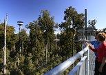 West Coast Tree Top Walk Experience