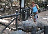 Full-Day Stone Town and Prison Island Tour in Zanzibar