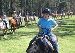 Horseback Riding Adventure on the Flame Azalea Trail